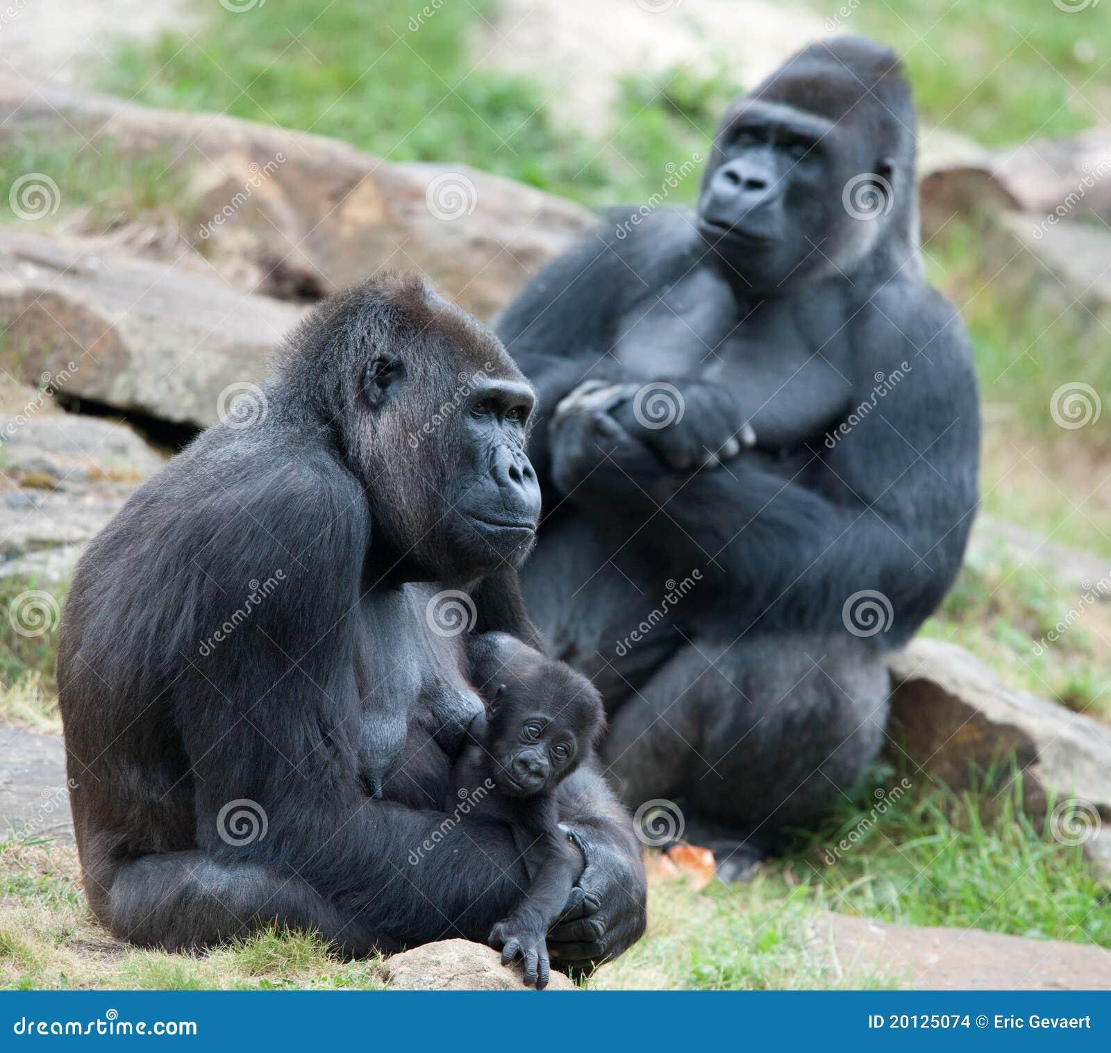 Gorilla und ihr Schätzchen