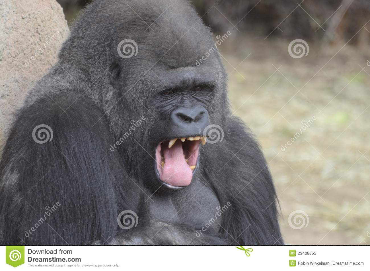 Gorilla Yawn Royalty Free Stock Photo - Image: 23408355