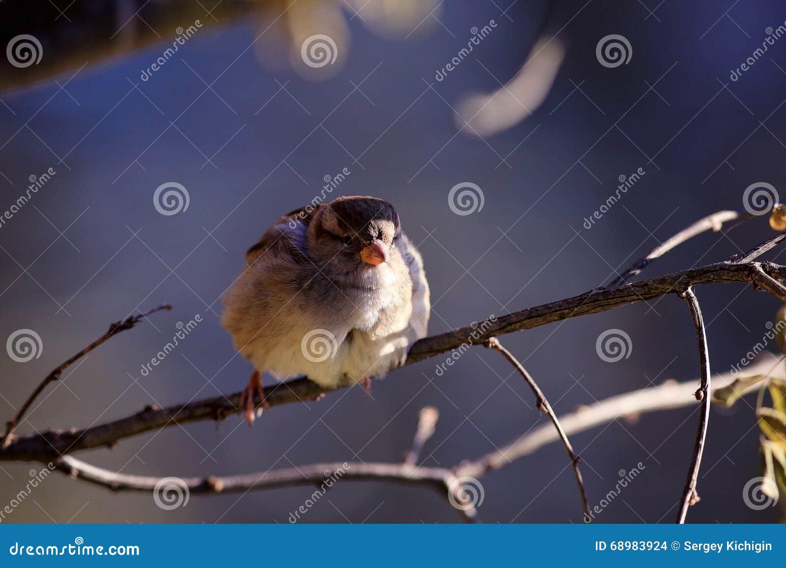 Gorrión en una rama