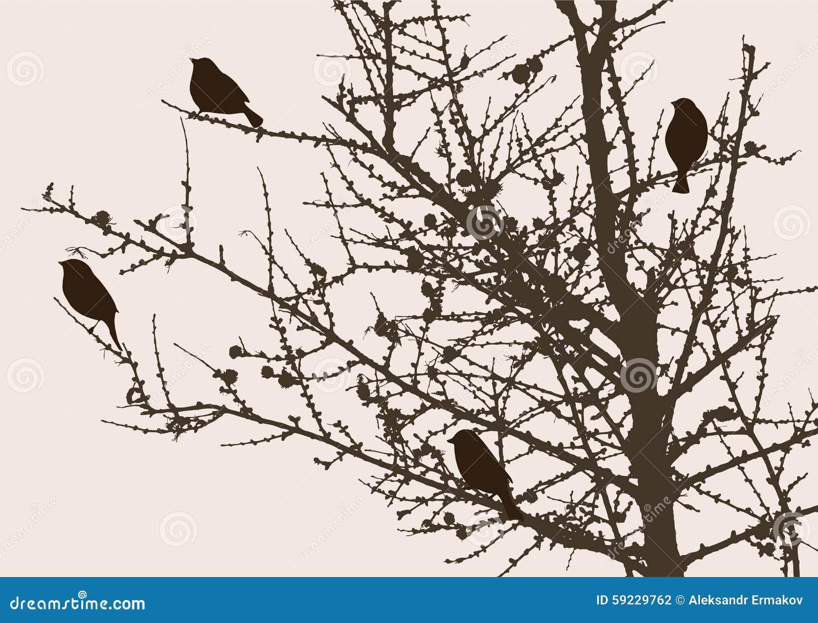 Download Gorriones En Un árbol De Pino Ilustración del Vector - Ilustración de árbol, outdoor: 59229762
