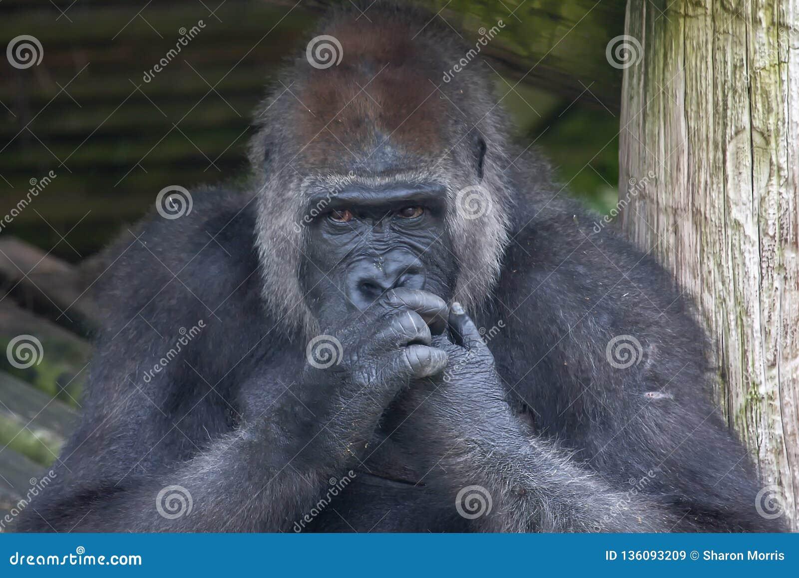 Goryl żuć jego gwoździe