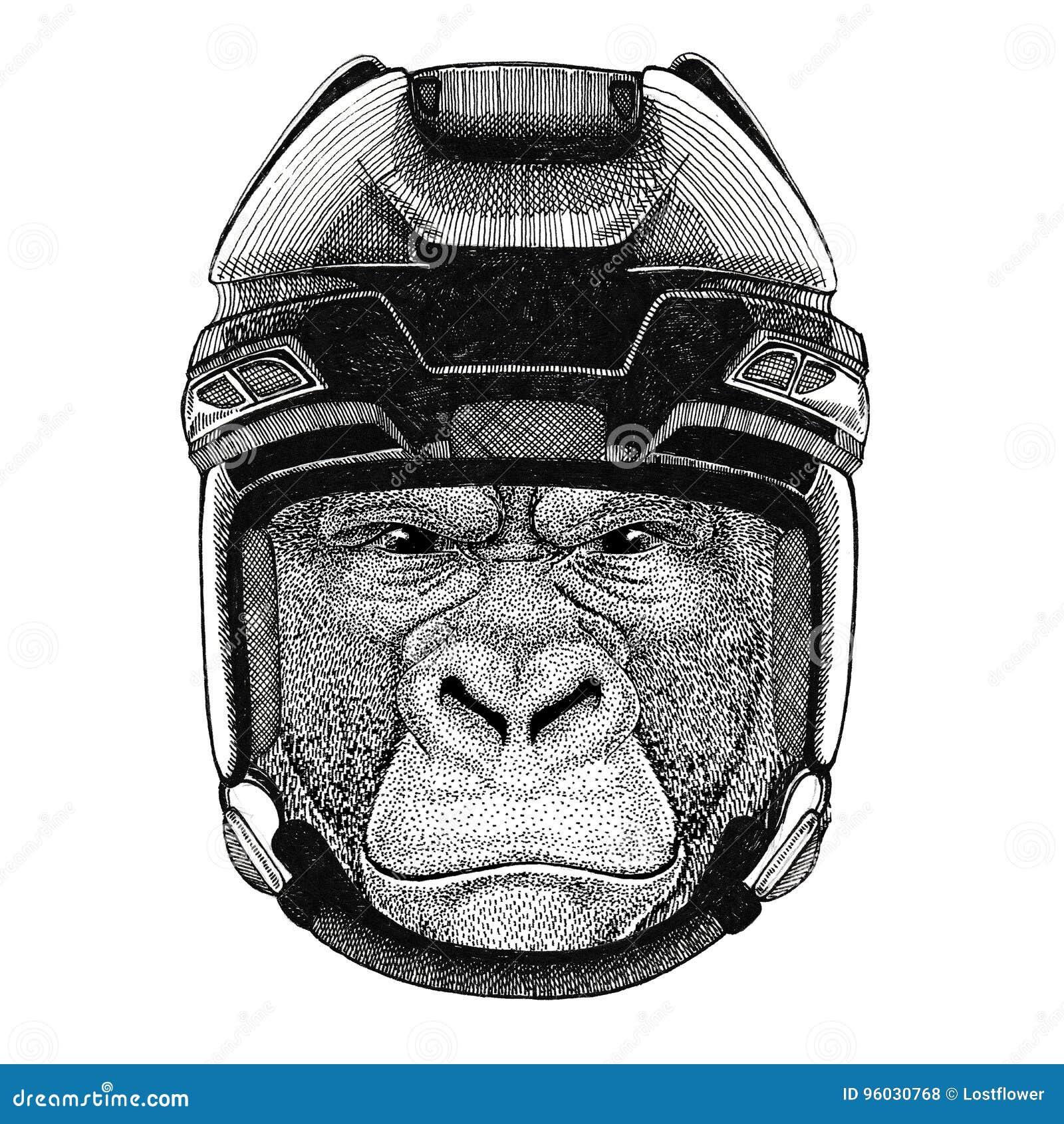 Goryl, małpa, małpuje Frightful zwierzęcego Hokejowego wizerunku dzikiego zwierzęcia jest ubranym hokejowego hełma sporta zimy sp