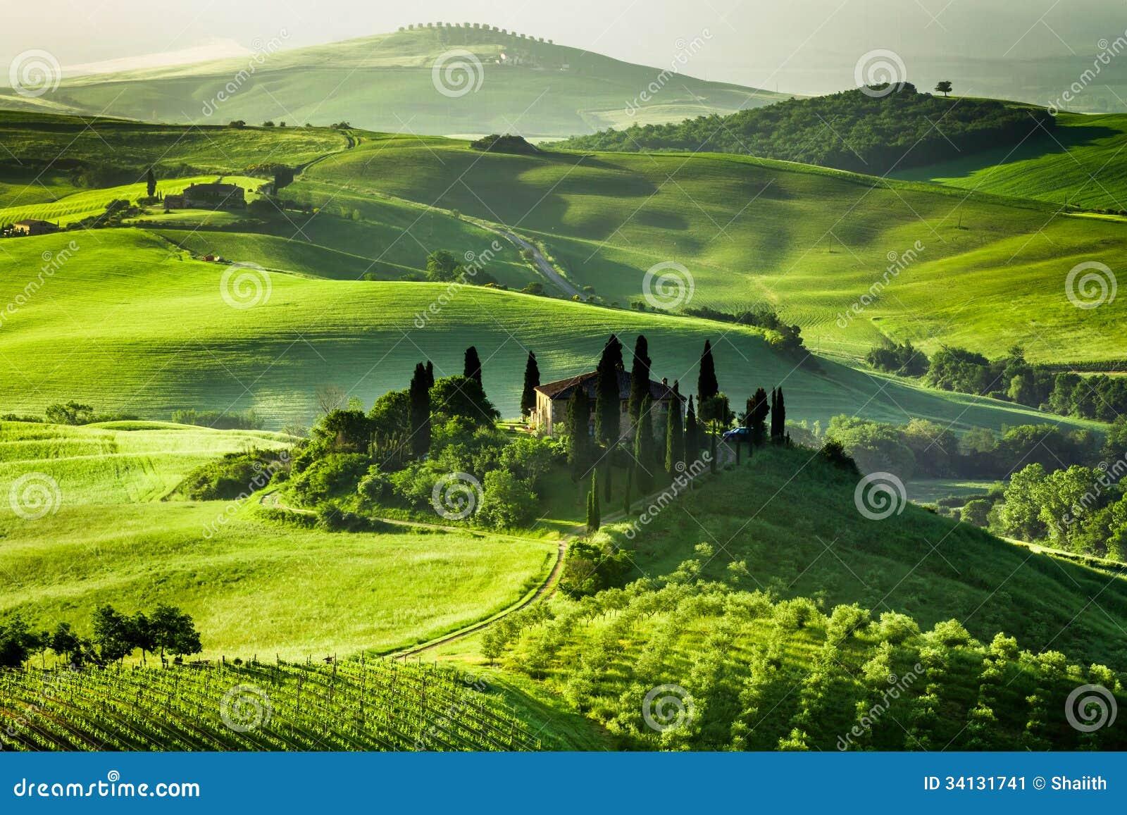 Gospodarstwo rolne oliwni gaje i winnicy
