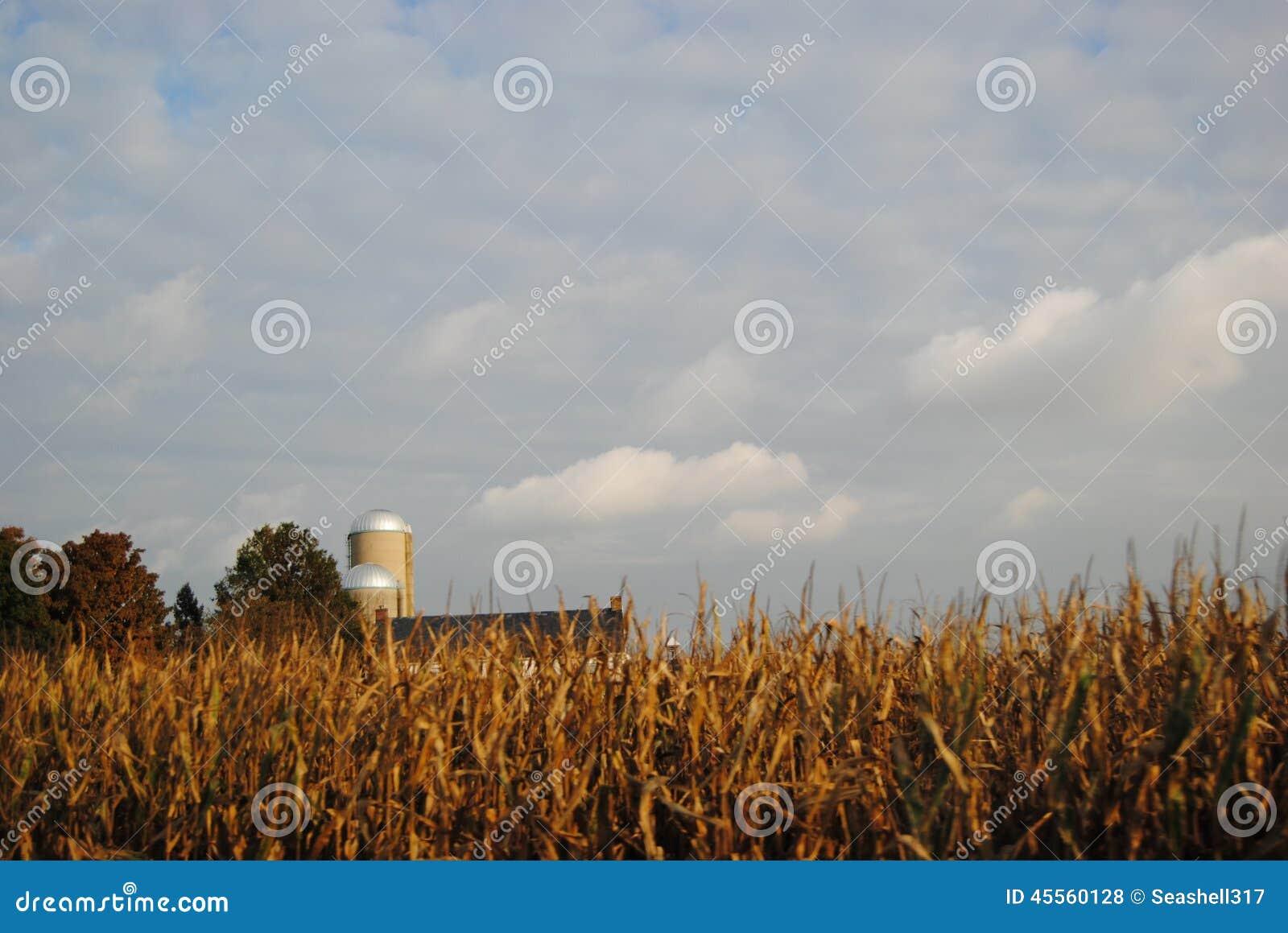 Gospodarstwo rolne w Lancaster pa