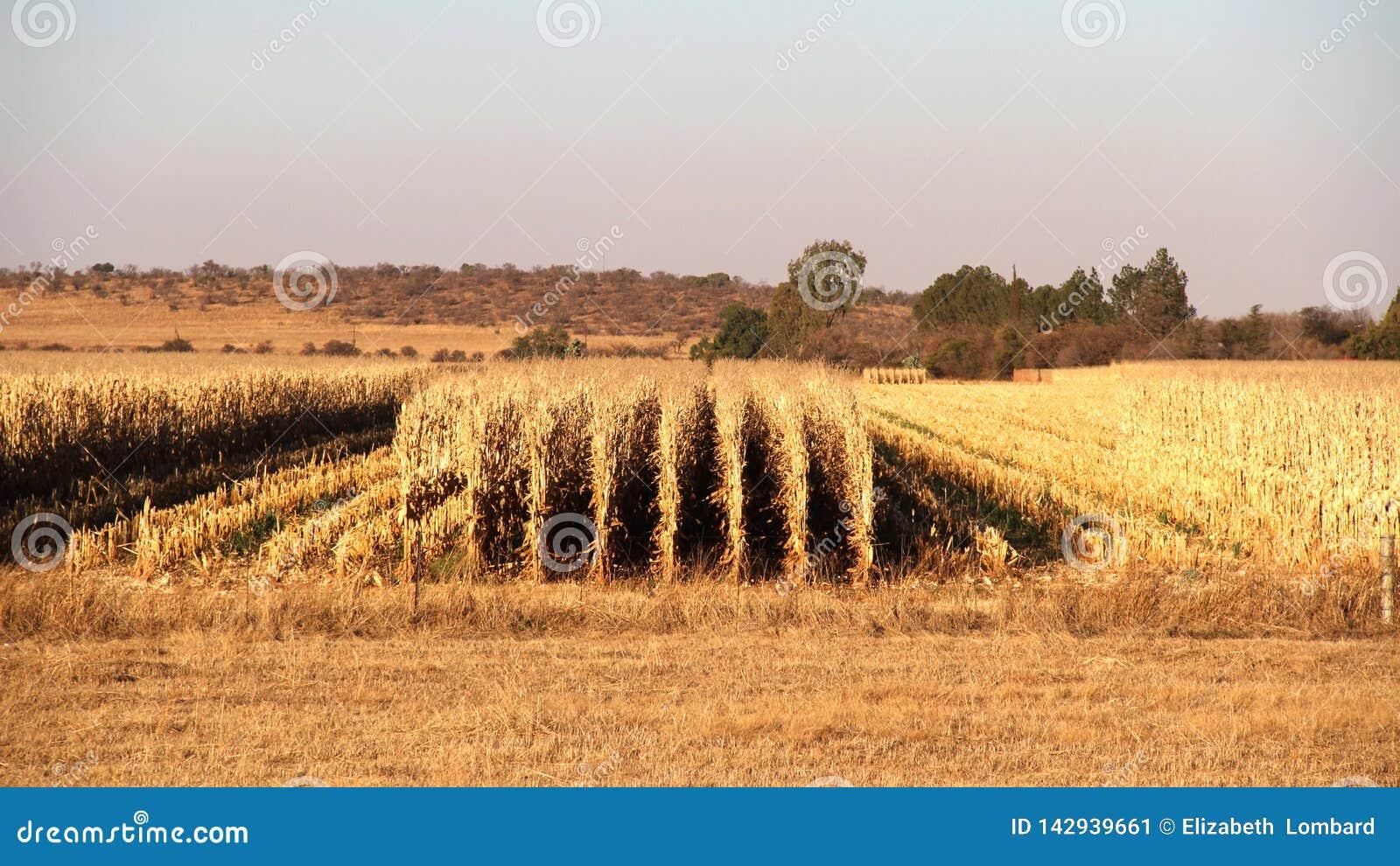 Gospodarstwo rolne w Potchefstroom, Południowa Afryka