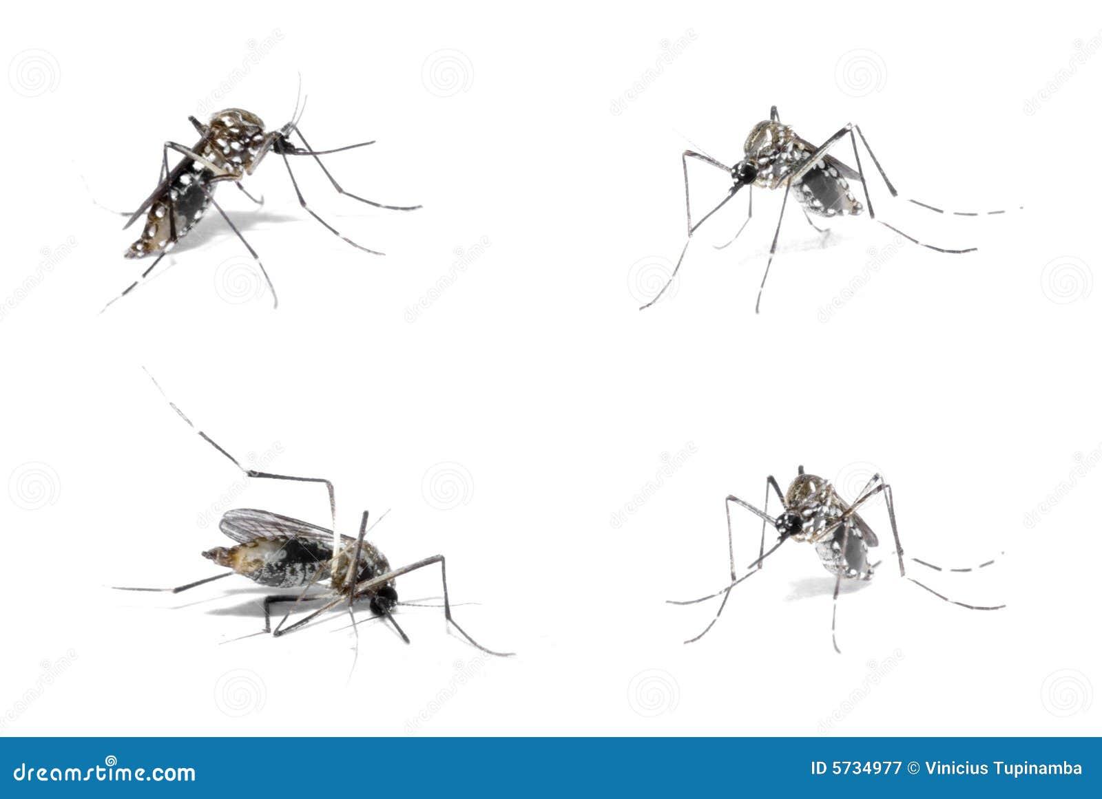 Gospodarz denga