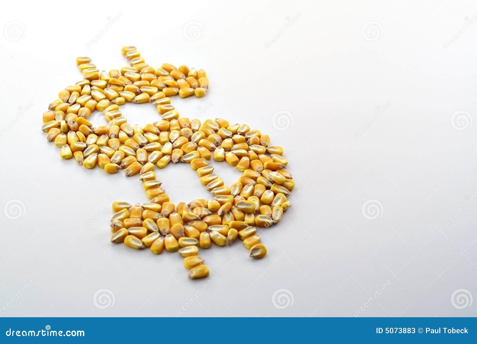 Gotówka upraw kukurydziany iv