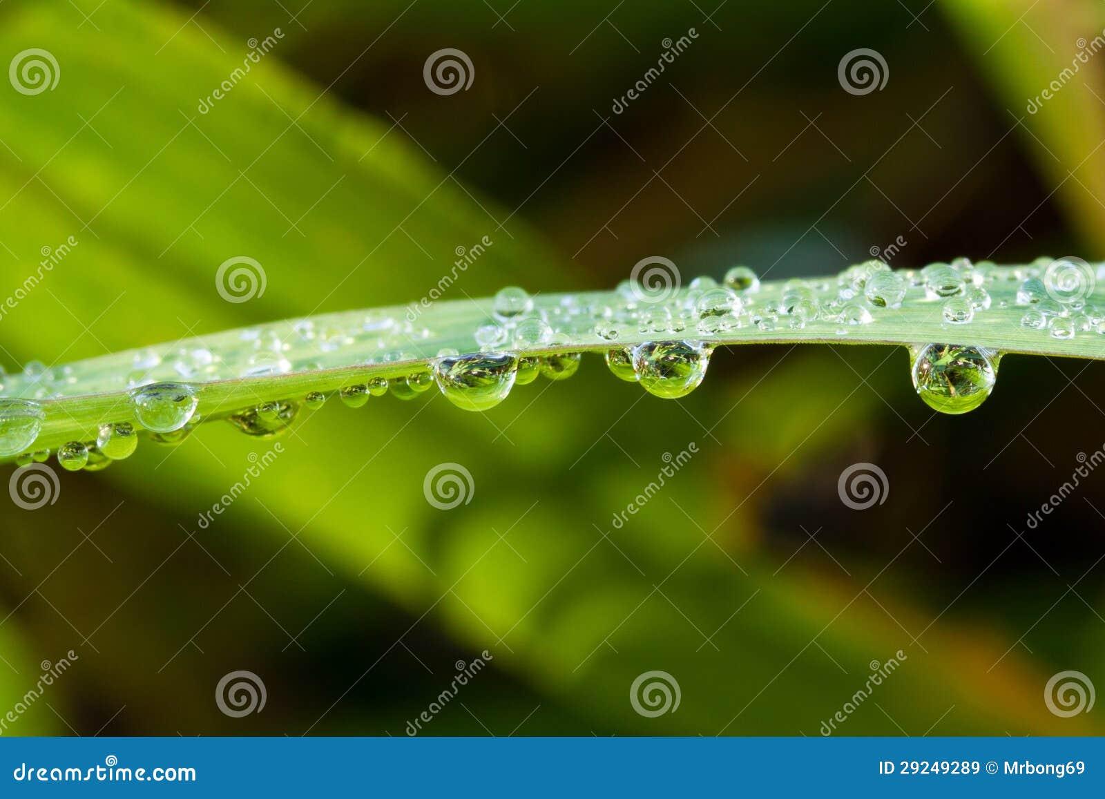 Download Gota imagem de stock. Imagem de frio, folha, planta, verde - 29249289
