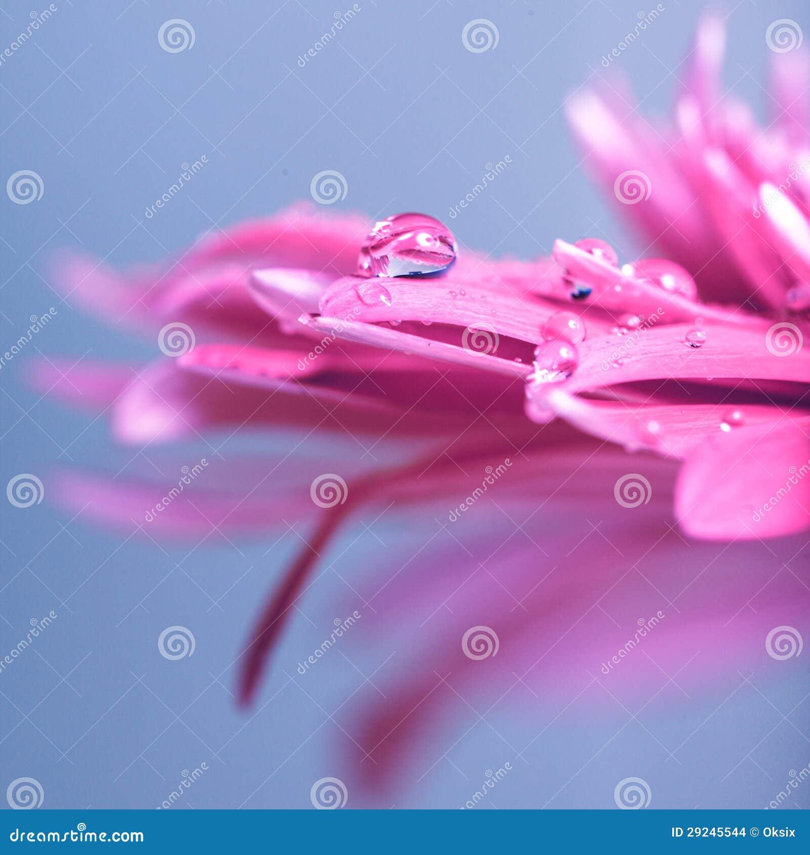 Download Gota da água na flor foto de stock. Imagem de macro, limpo - 29245544