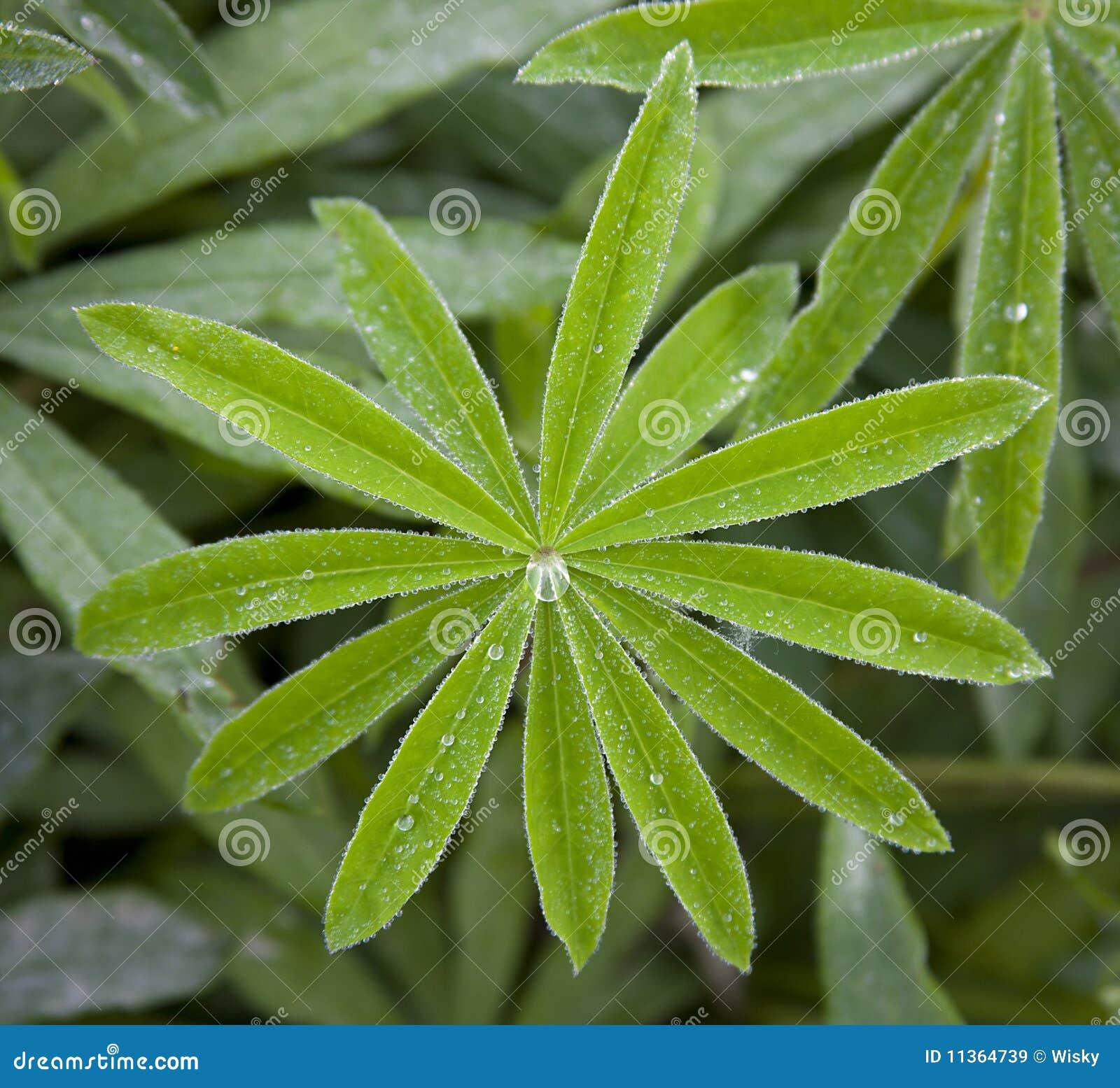 Gota da água na folha