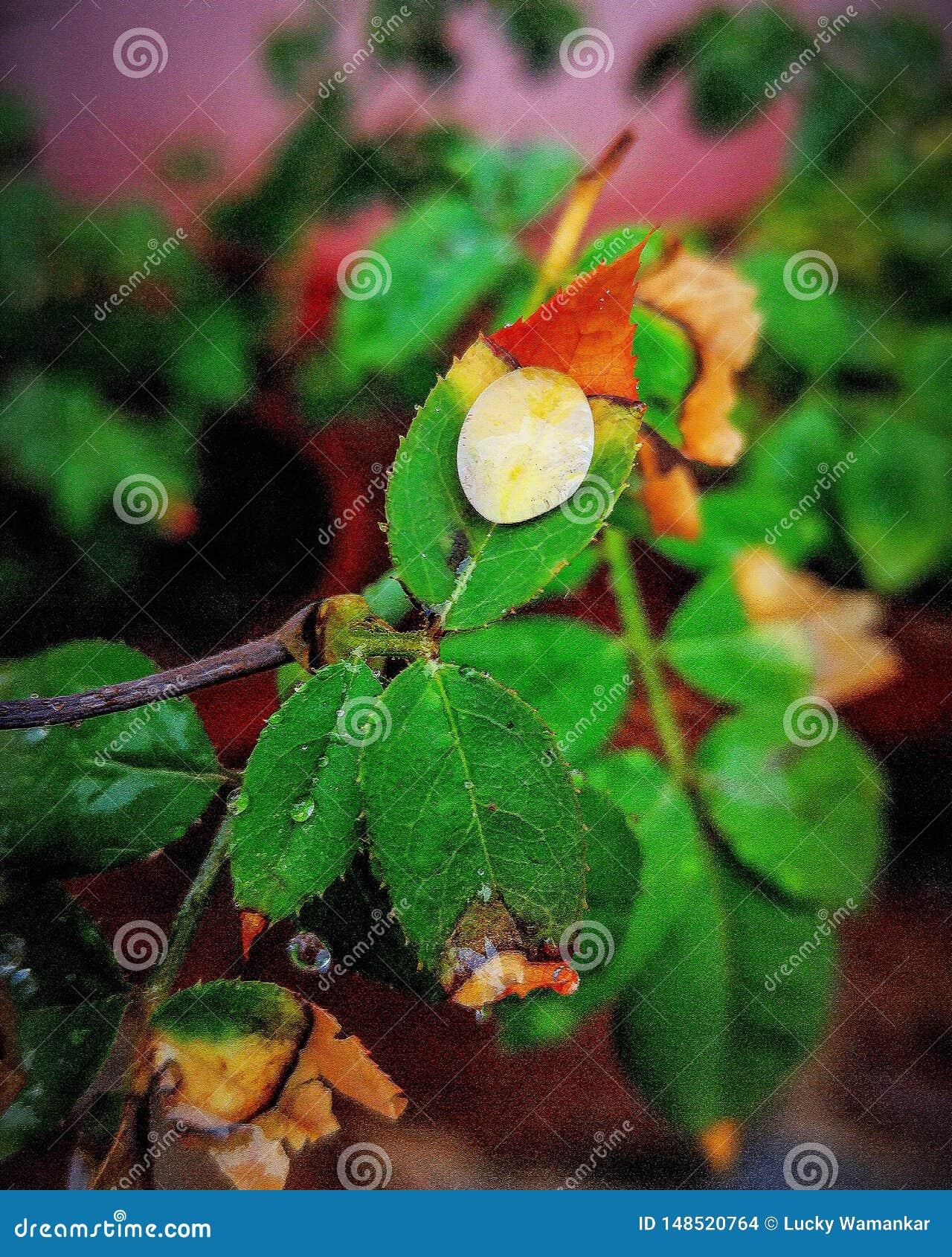 Gota de água na folha colorida
