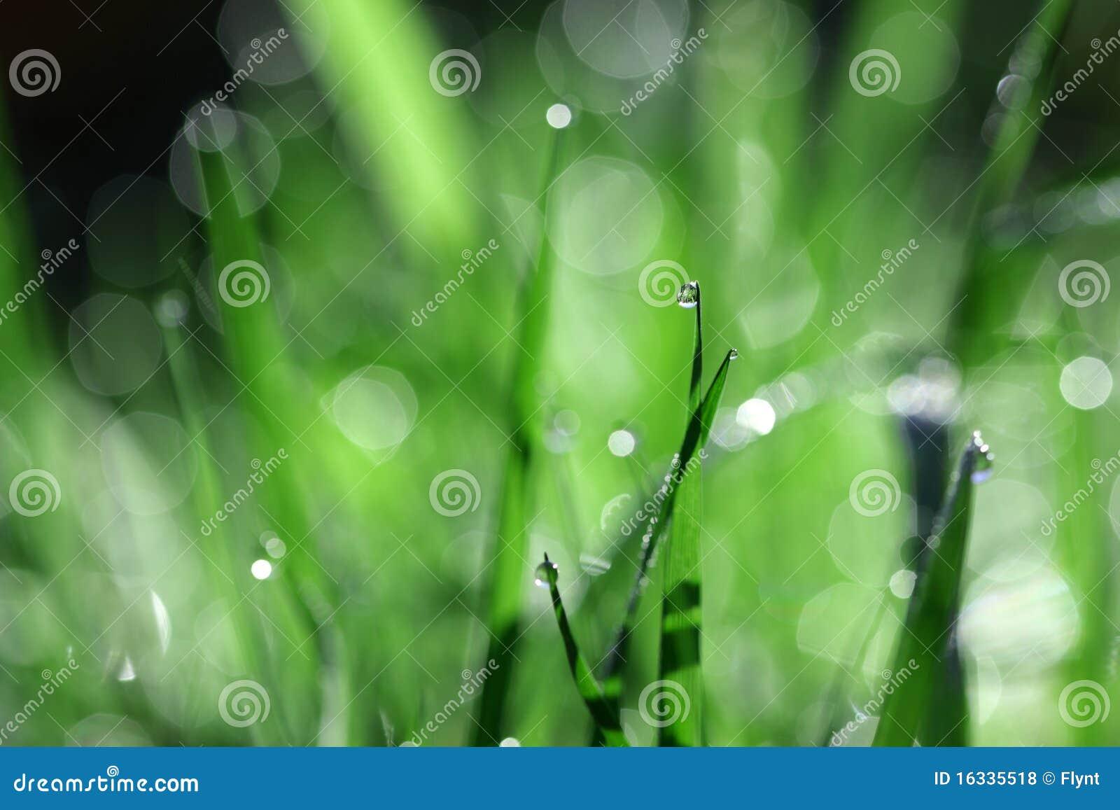 Gota de agua en la lámina de la hierba