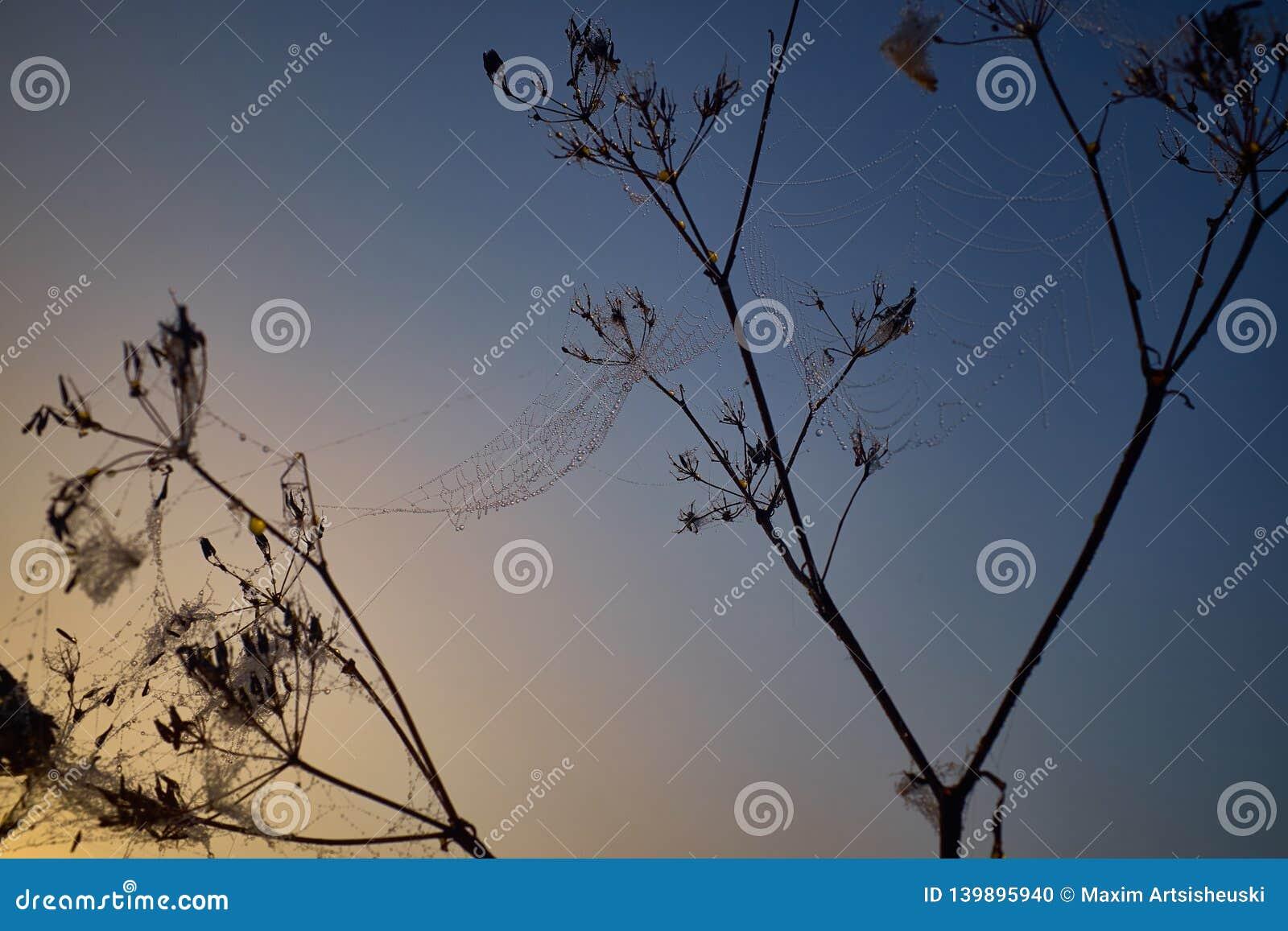 Gota do orvalho durante o nascer do sol colorido calmo