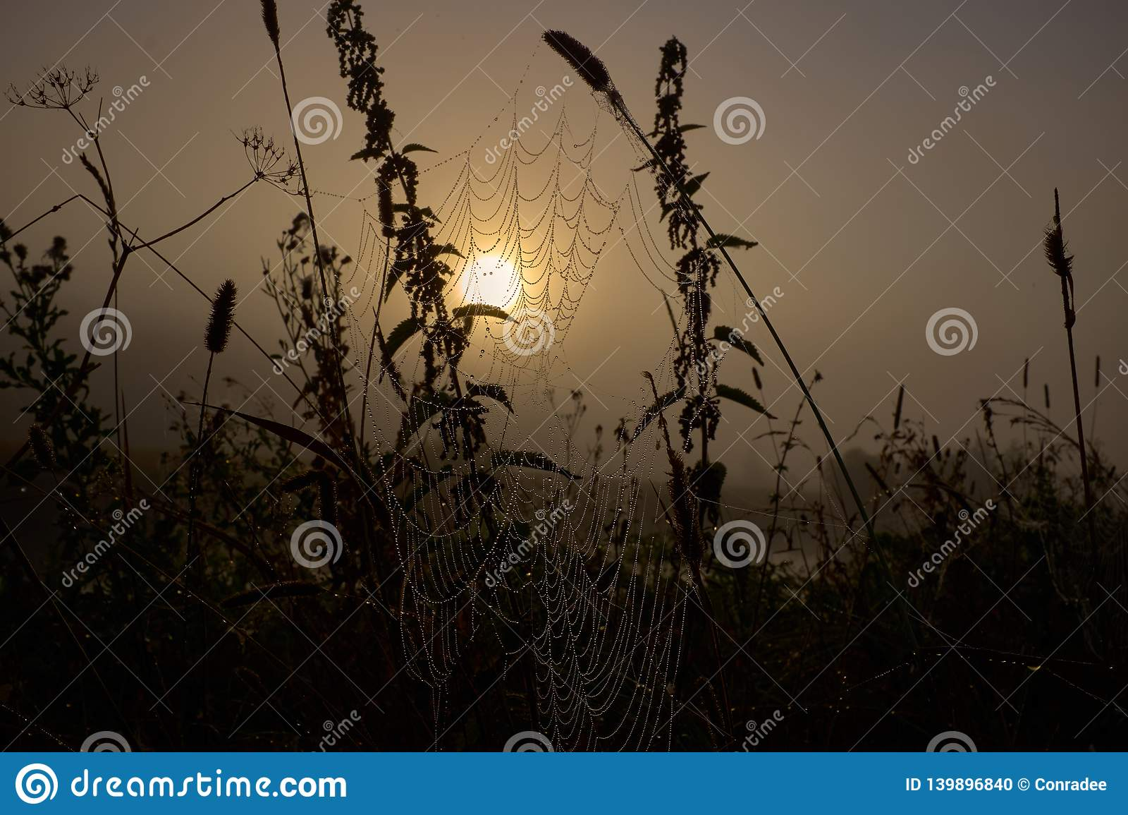 Gota do orvalho em uma linha da aranha durante o nascer do sol calmo