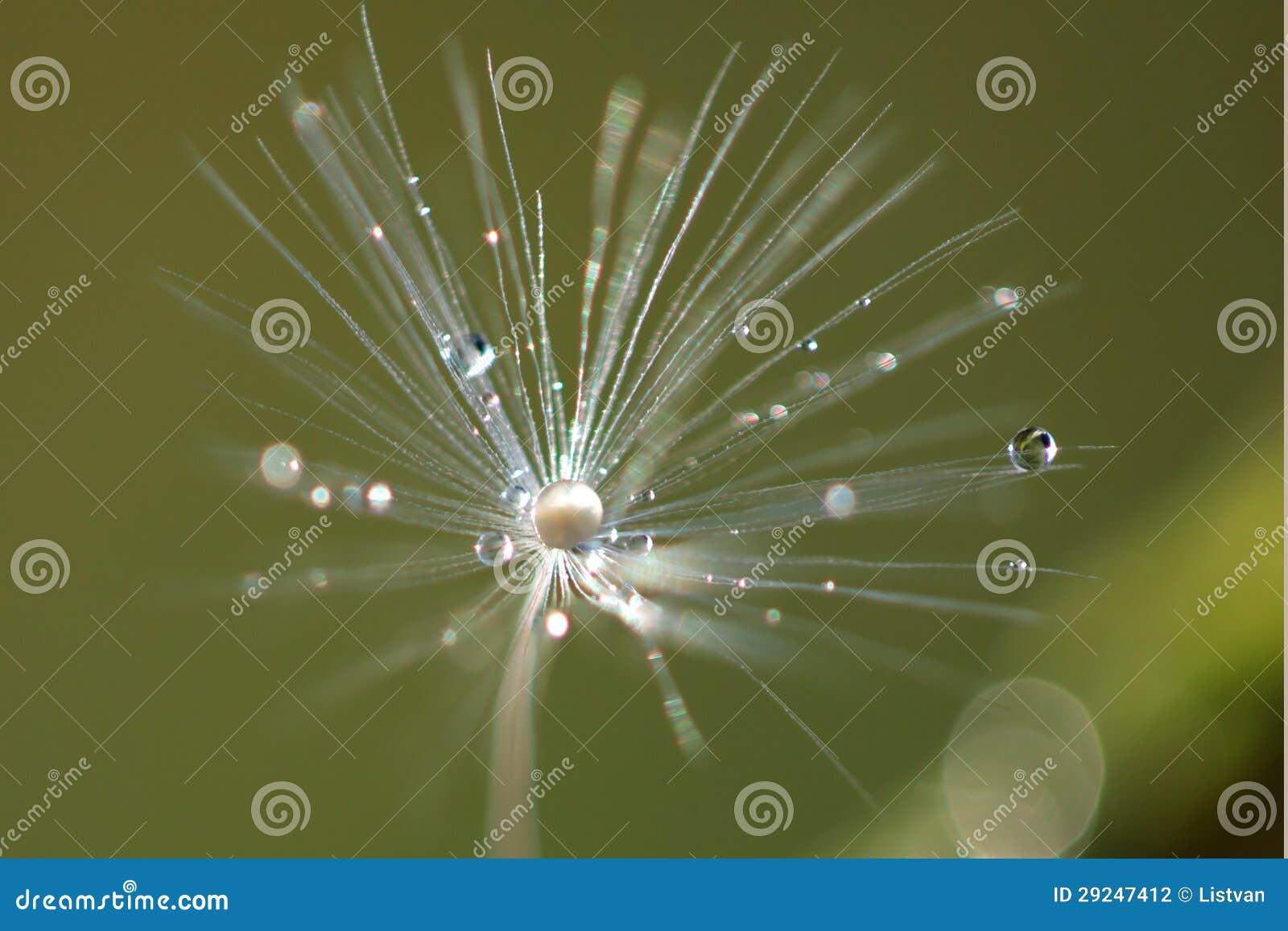 Download Gotas foto de stock. Imagem de fundo, esfera, nave, macro - 29247412