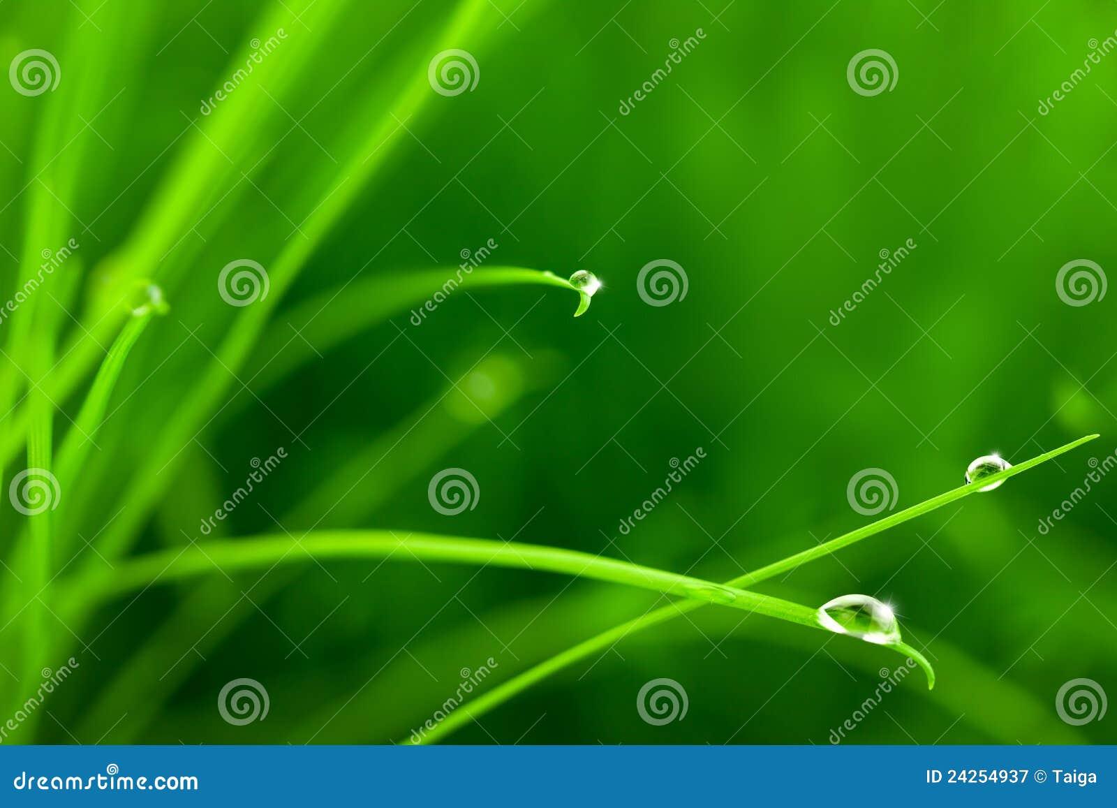 Gotas da água na grama com faísca