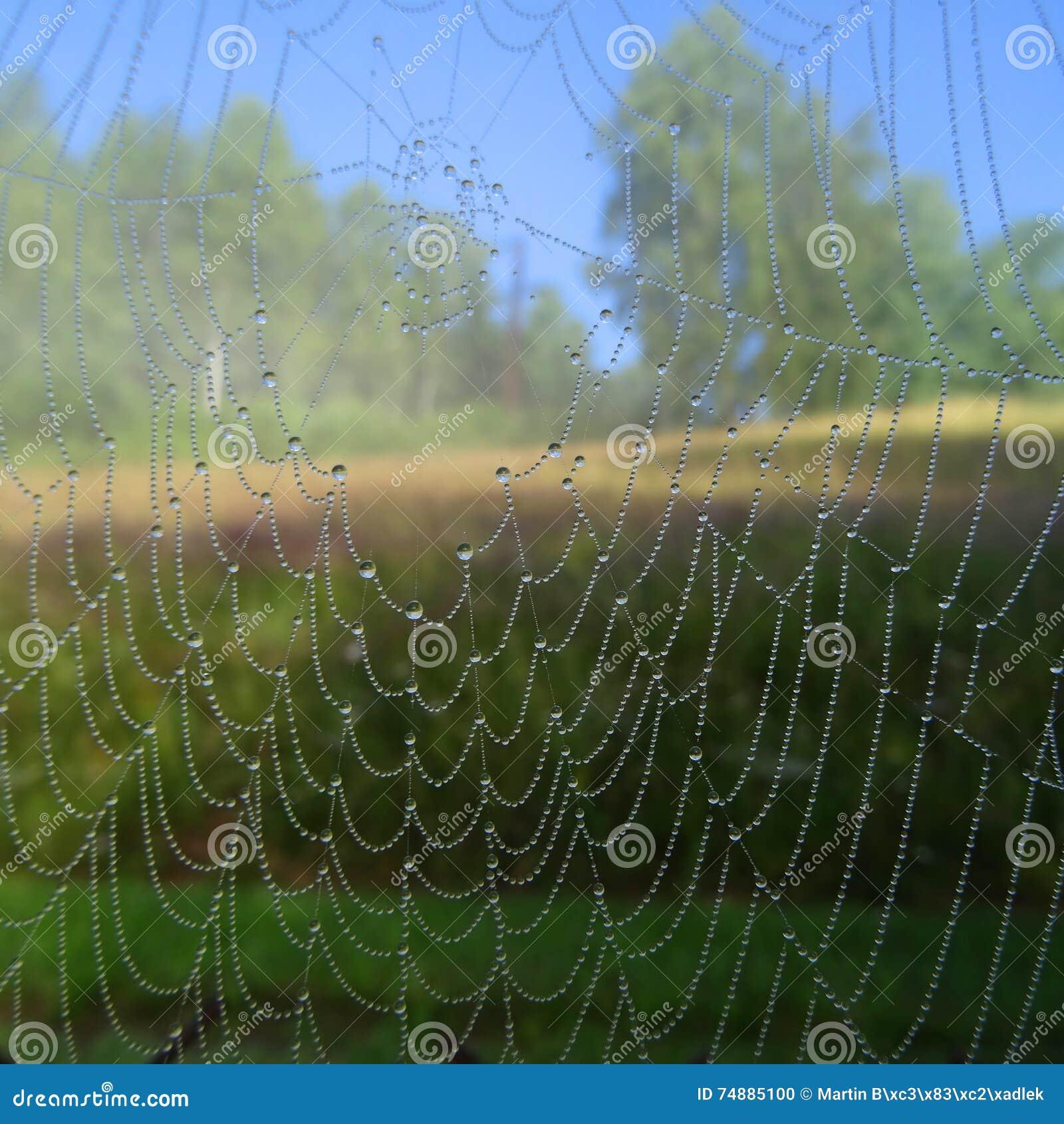 Gotas da água na rede da aranha