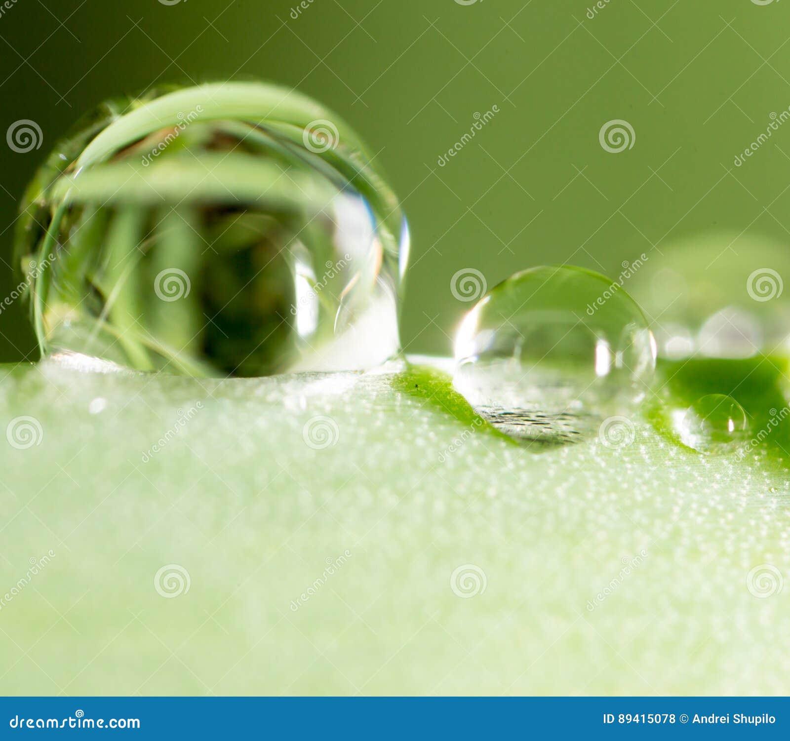 Gotas da água no tiro verde fresco