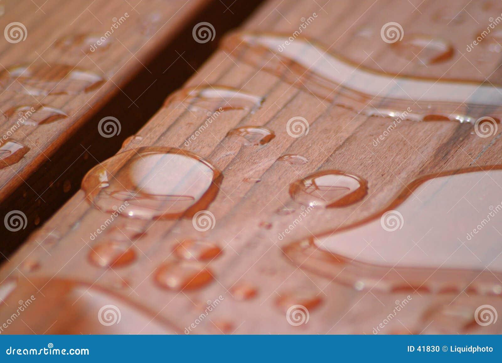 Gotas da chuva no Redwood