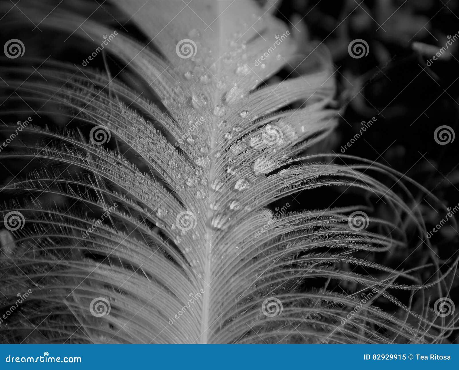 Gotas de agua en una pluma