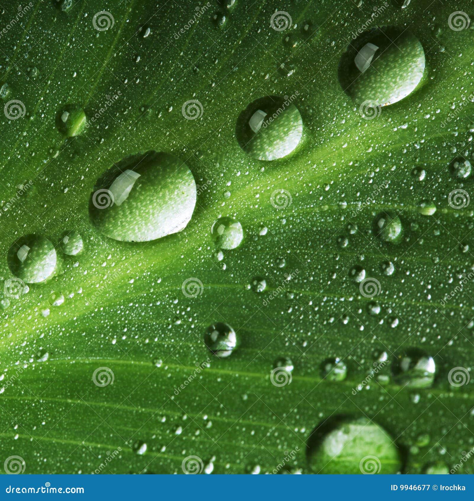 Gotas del agua en la hoja verde fresca
