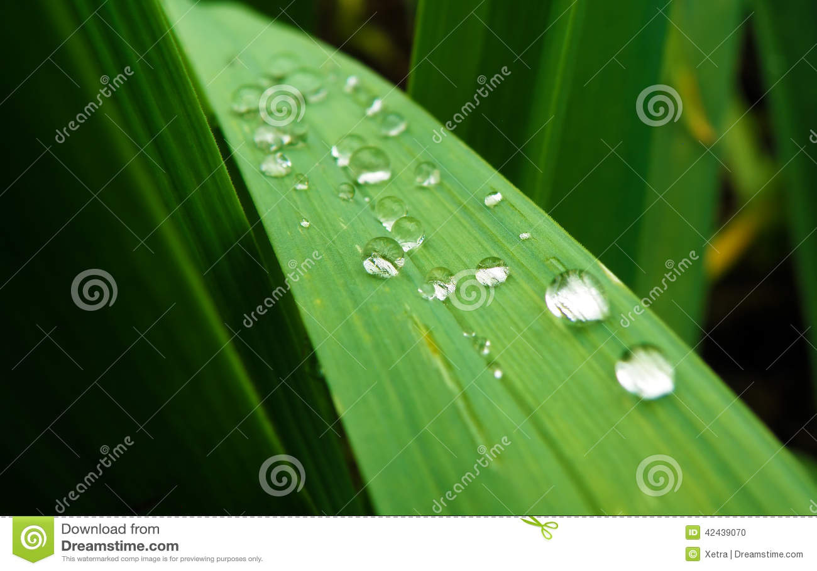 Gotas del agua en la planta