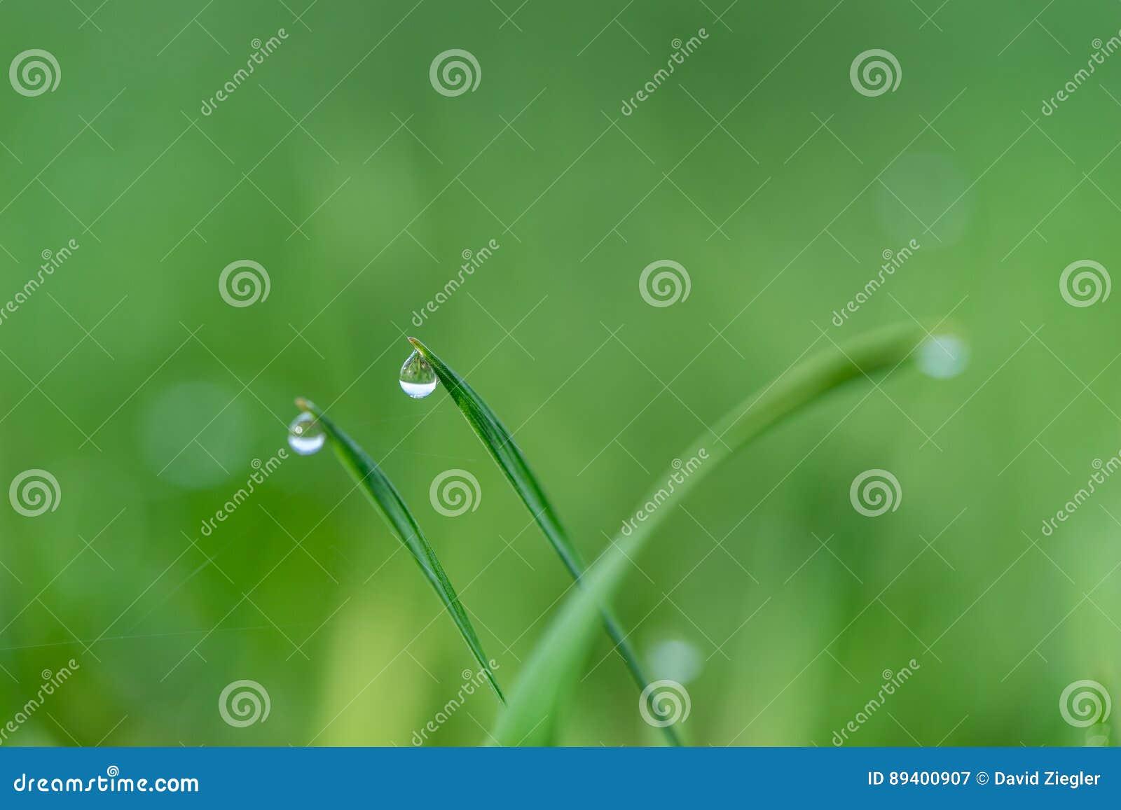 Gotas e grama da chuva