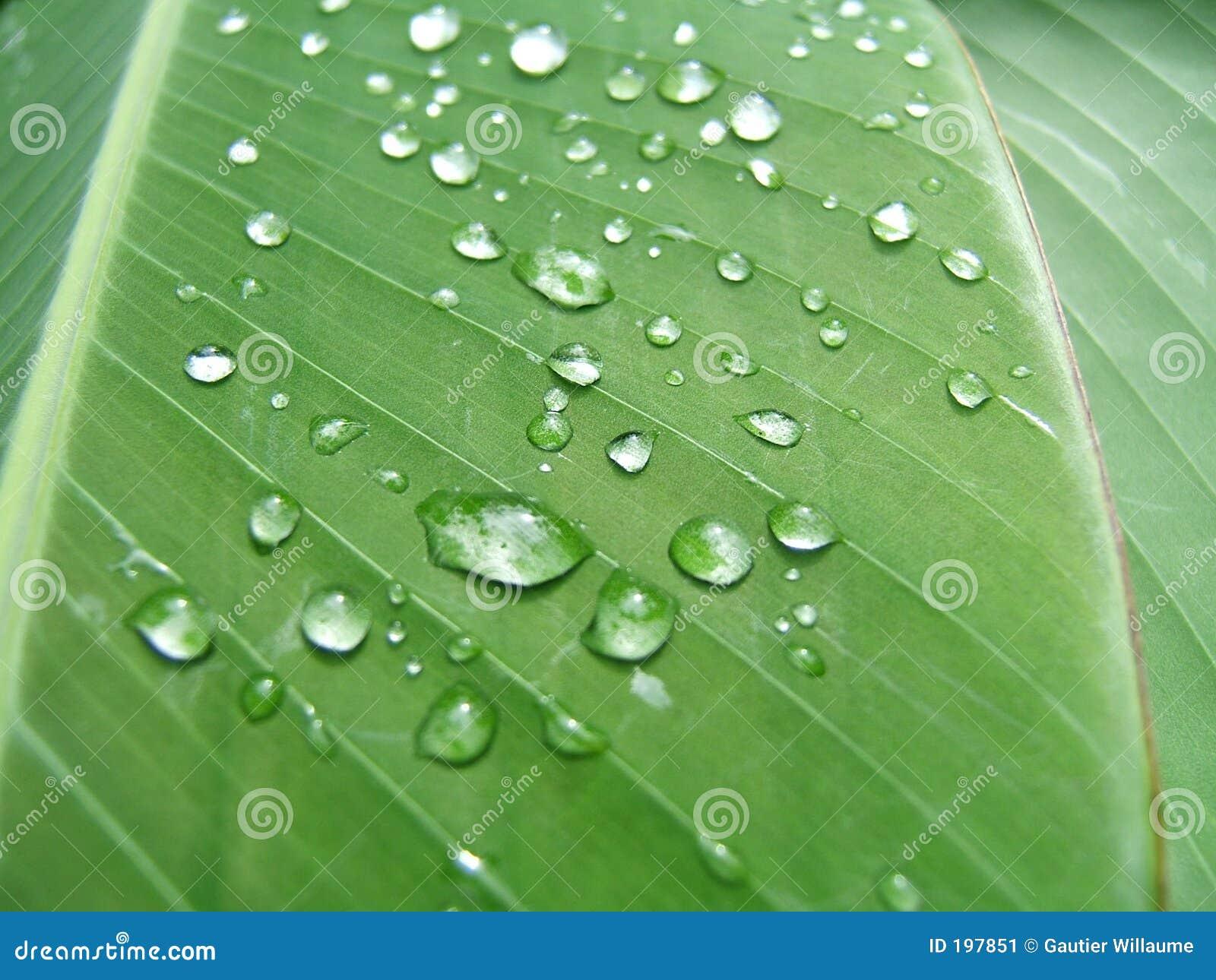 Gotas em uma folha