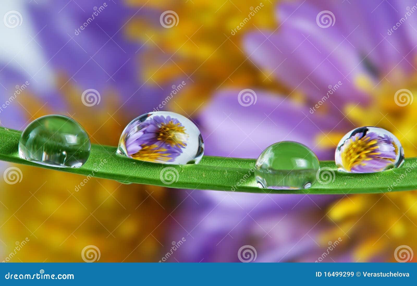Gotas en la lámina de la hierba