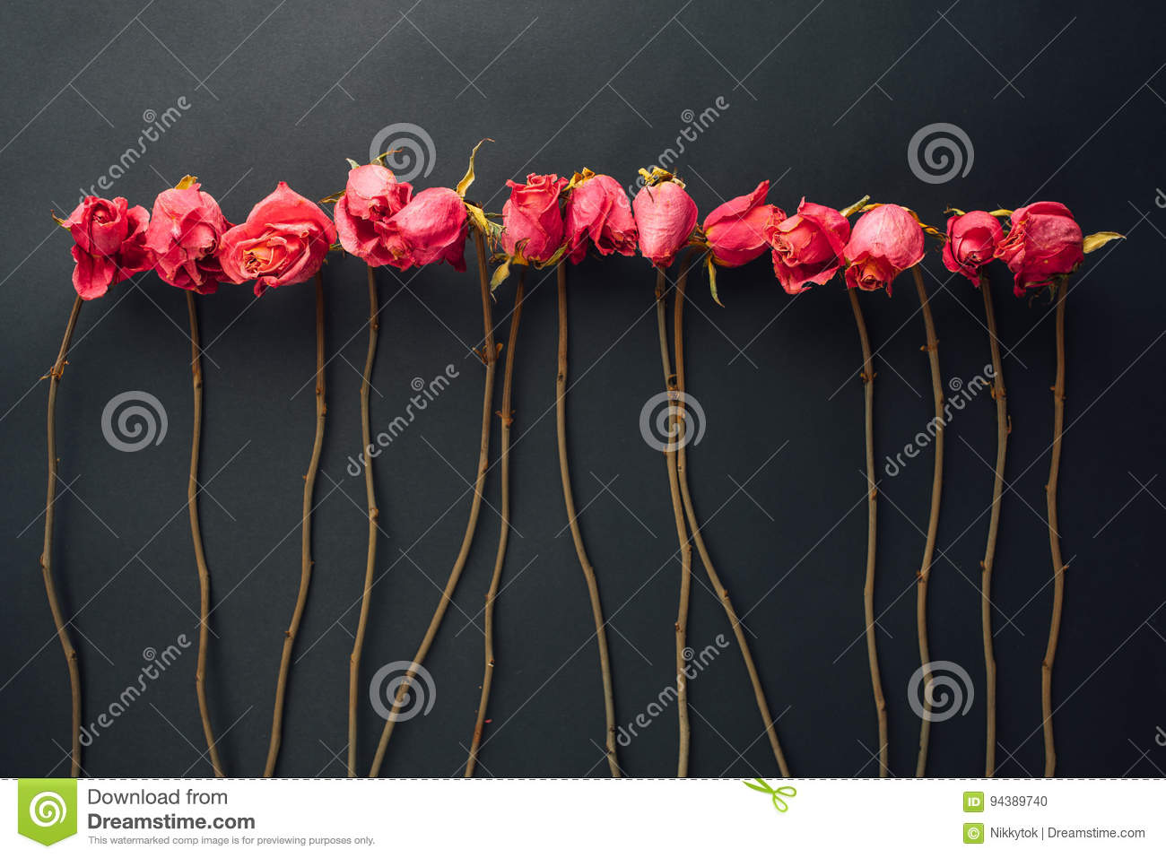 Goth Style Dry Roses Stock Photo Image Of Aesthetic 94389740