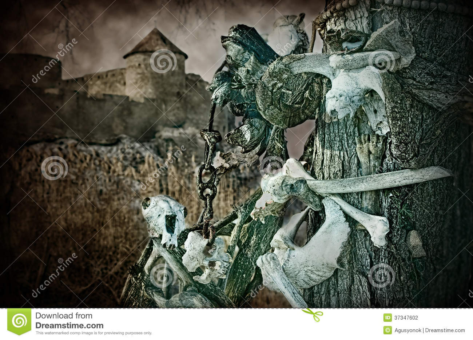 Gotiska skallar och ben nära den gamla fästningen