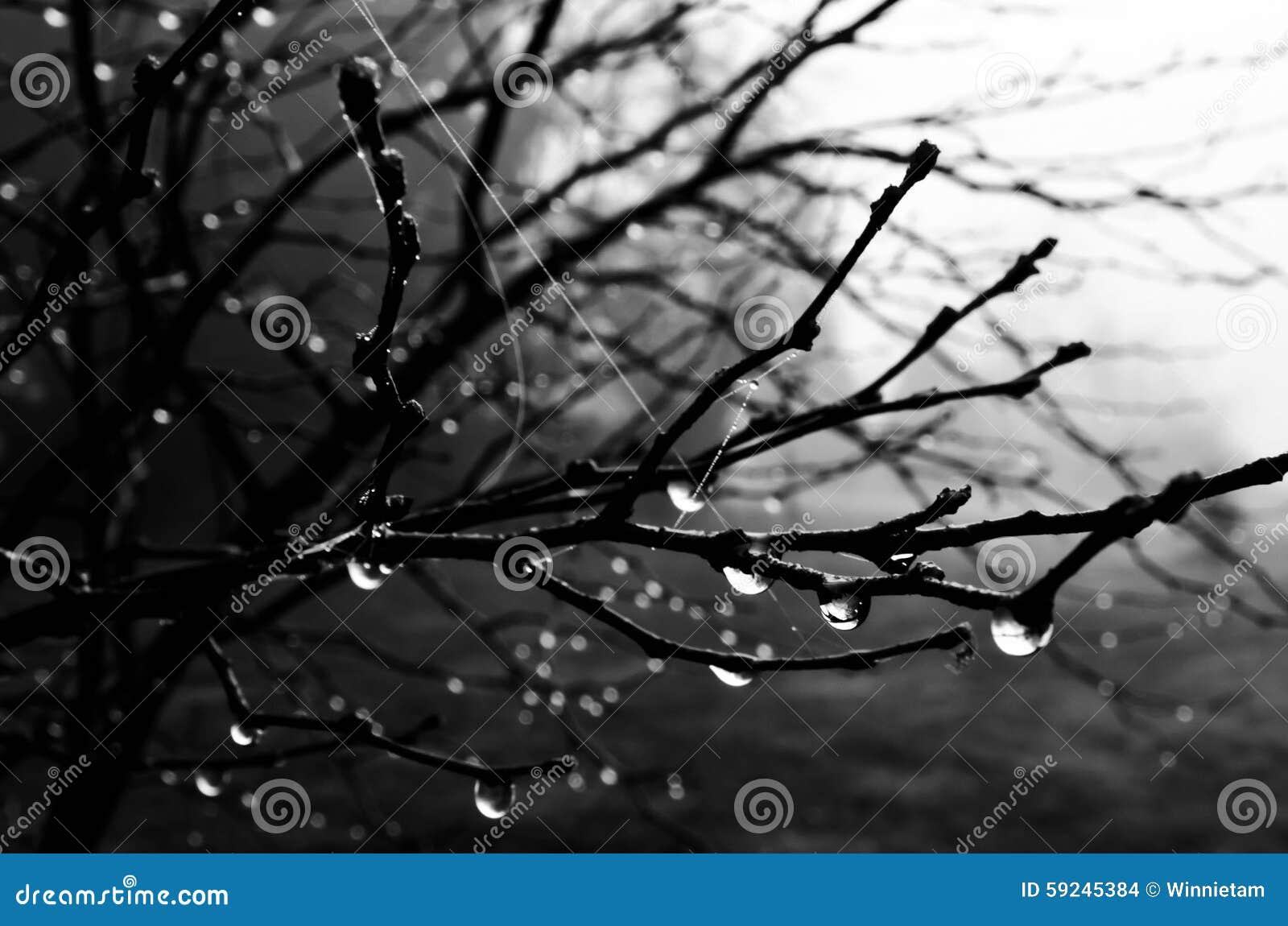 Gotitas del rocío de la mañana en una rama de árbol