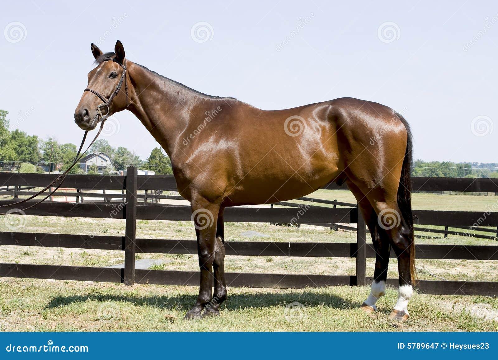 Gott se för häst