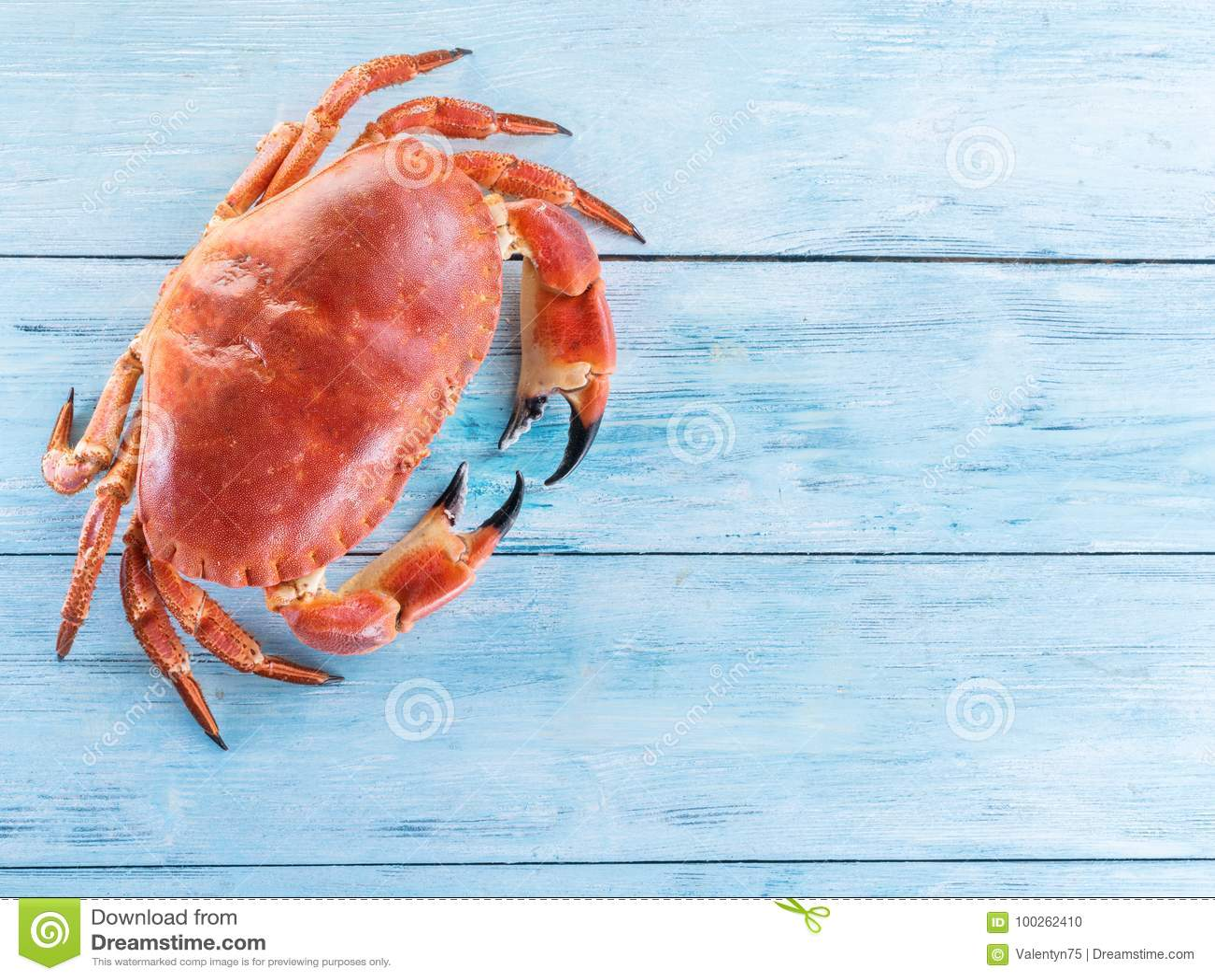 Gotujący brown krab lub jadalny krab na błękitnej drewnianej zakładce