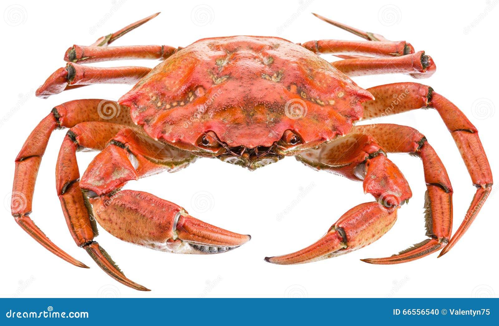 Gotujący krab