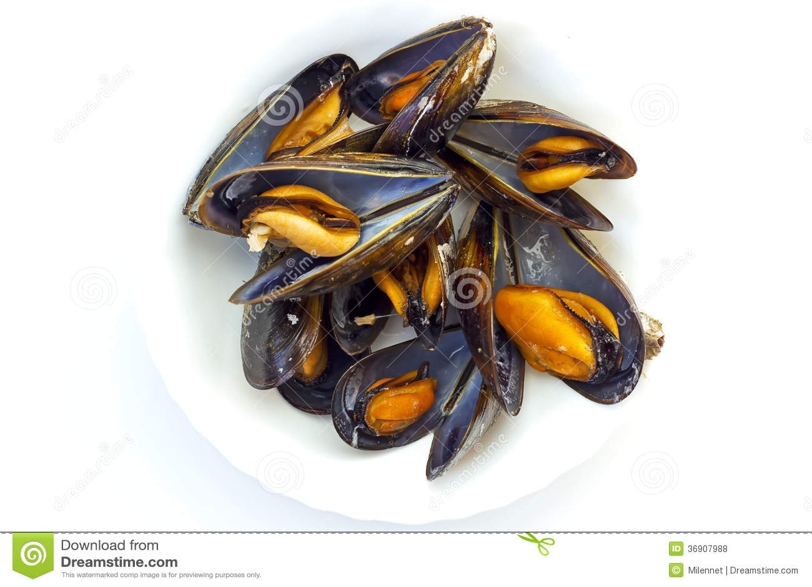Gotujący mussels