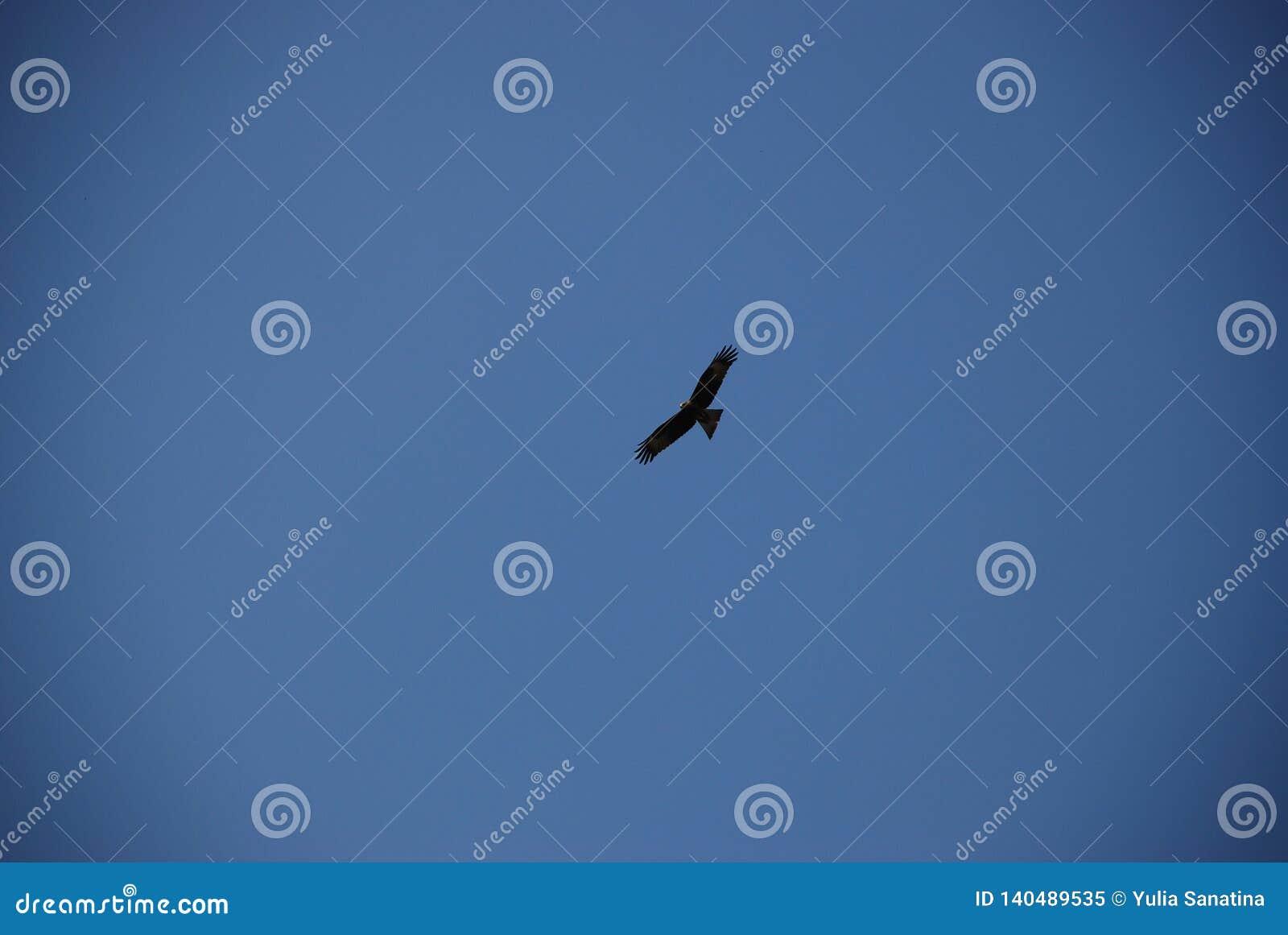 Gouden adelaar die hoog in de duidelijke blauwe hemel vliegen