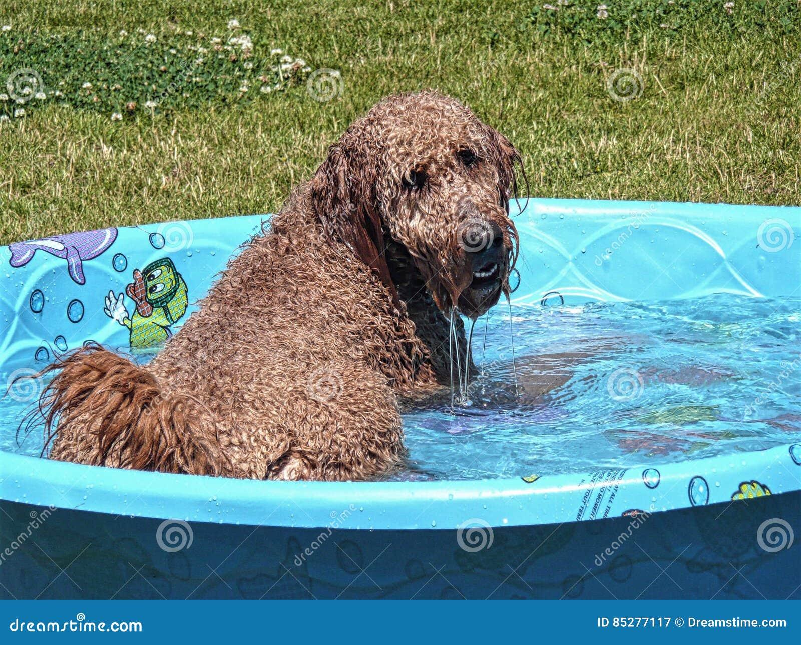 Gouden Krabbel in Zwembad
