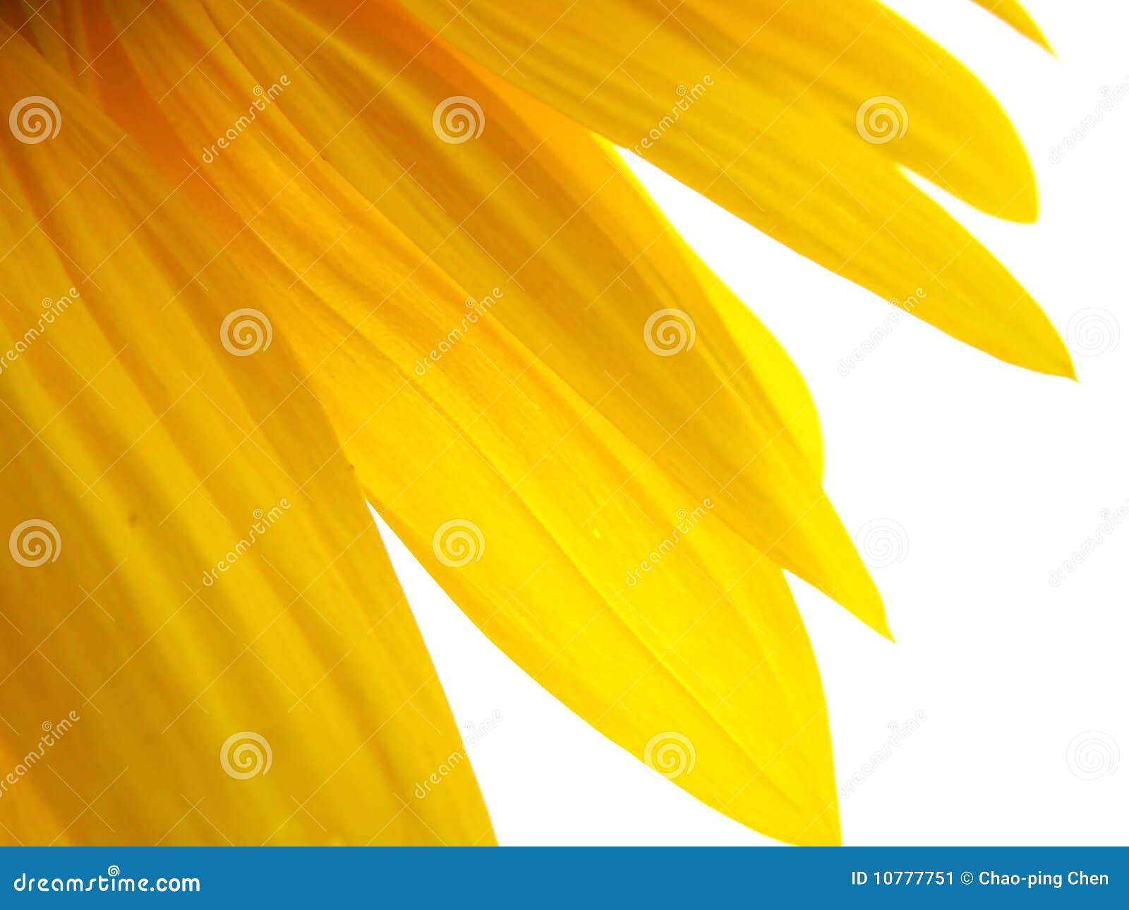 Gouden zon