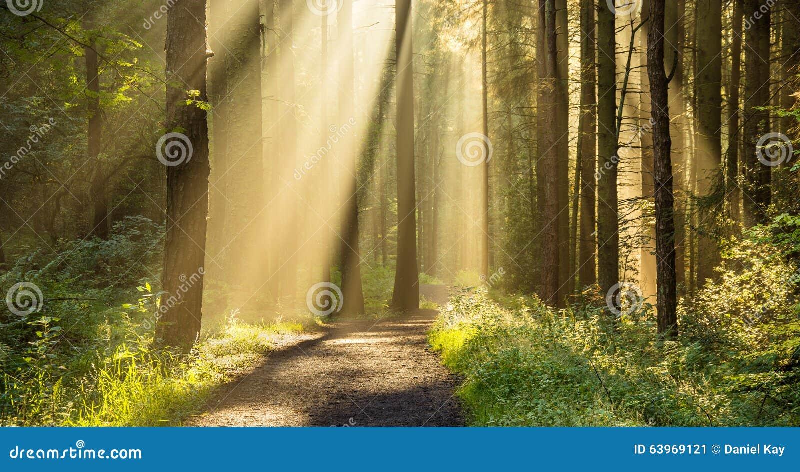 Gouden Zonnestralen die door Bomen in Mooi Engels Bosbos glanzen