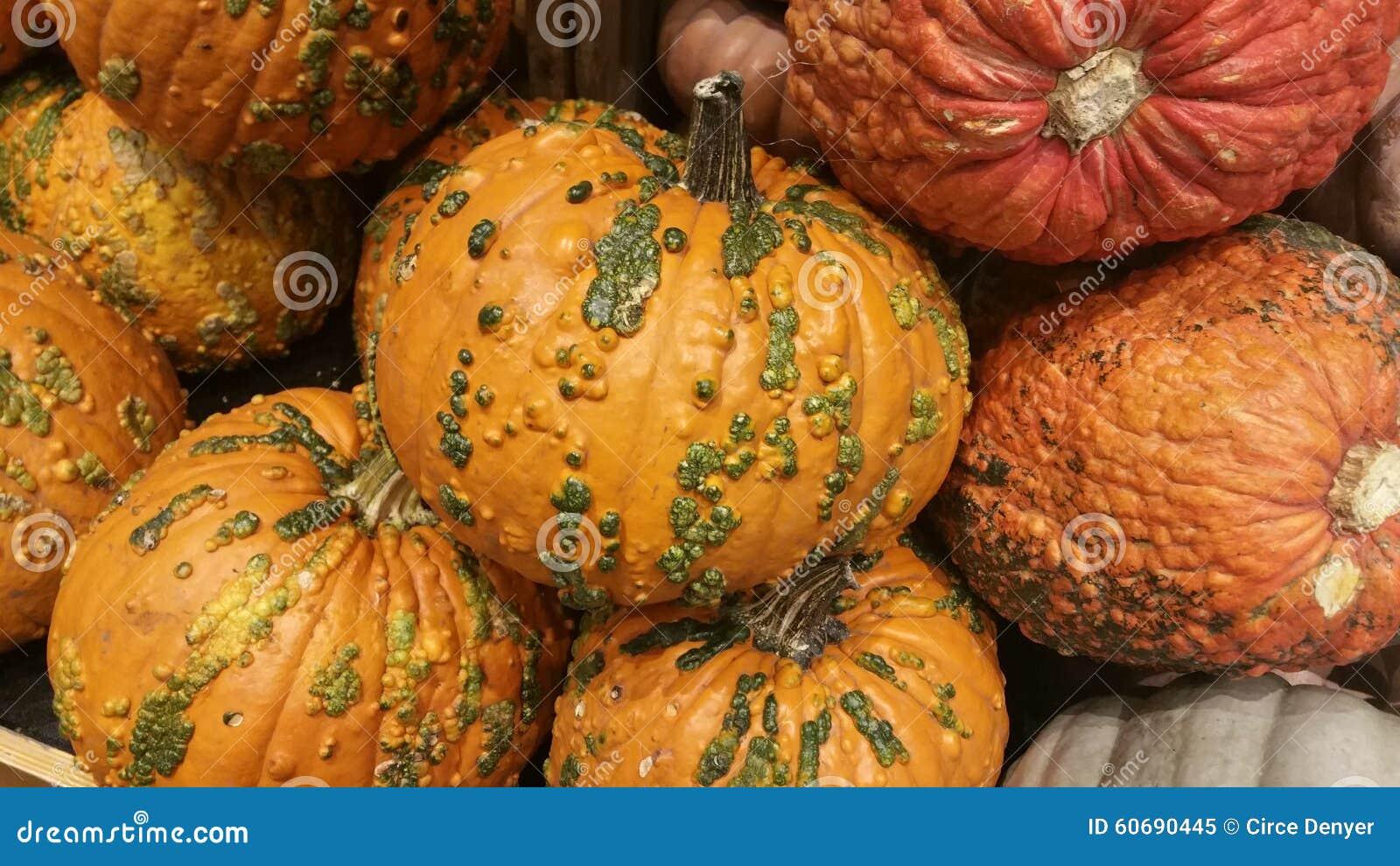 gourd like pumpkins stock image image of textured green 60690445 rh dreamstime com