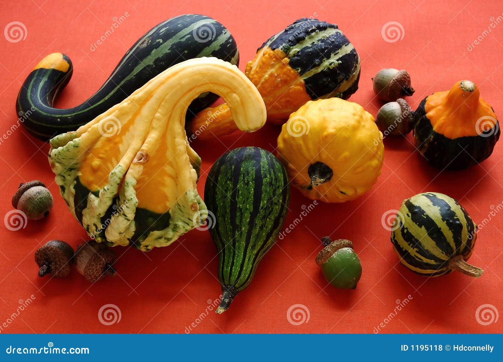 Gourds жолудей