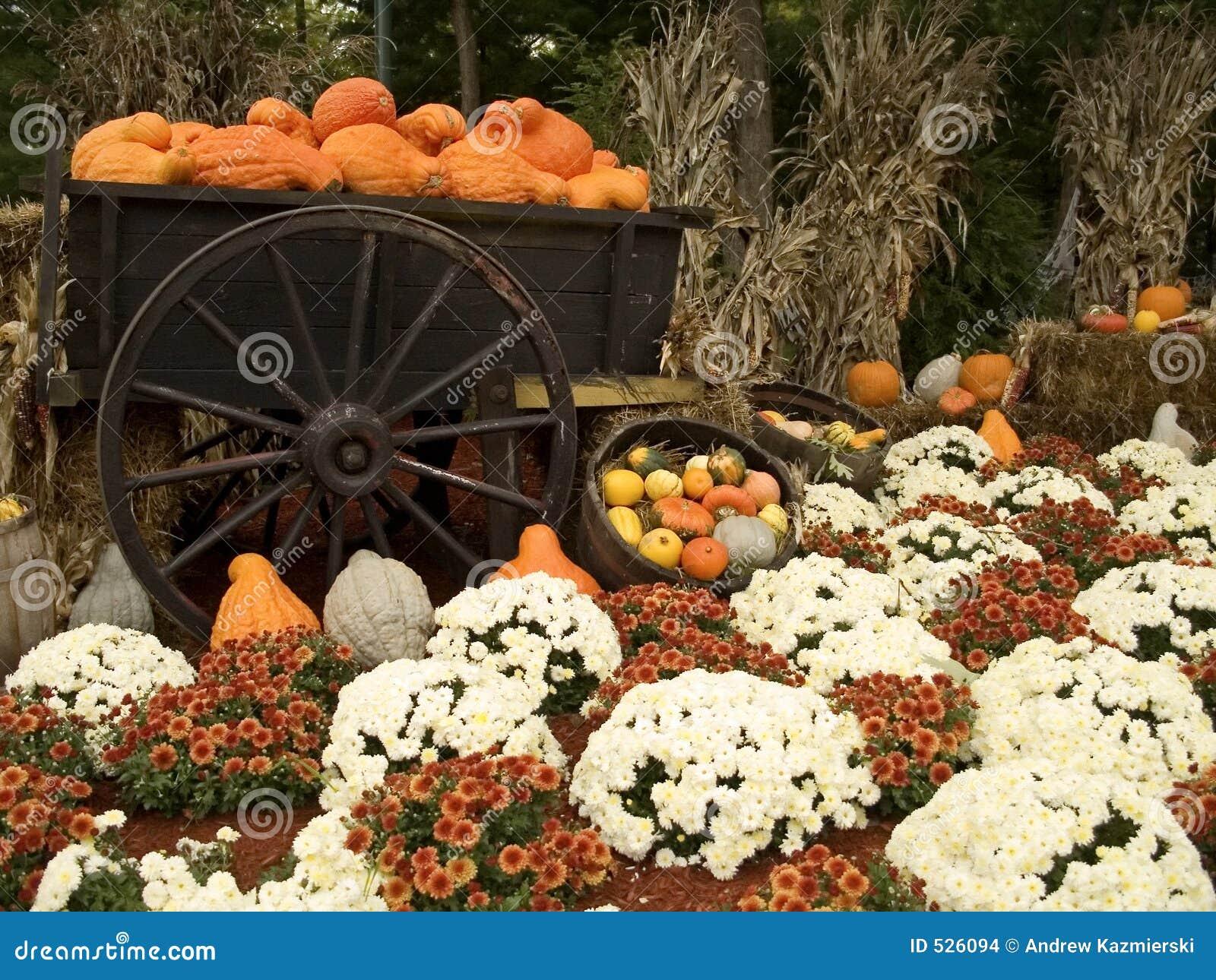 Gourds e Mums