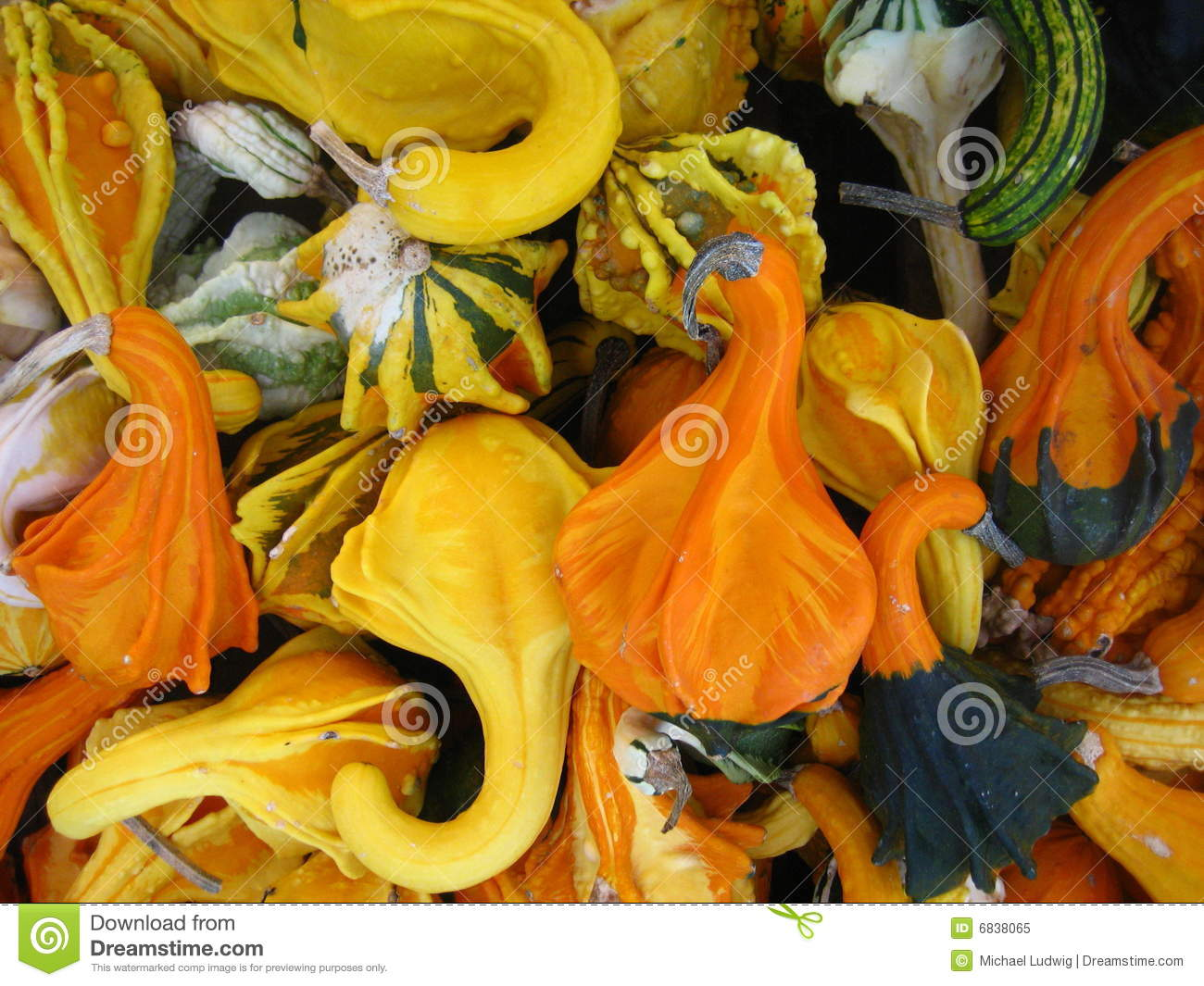 gourds and more gourds stock image image of thanksgiving 6838065 rh dreamstime com