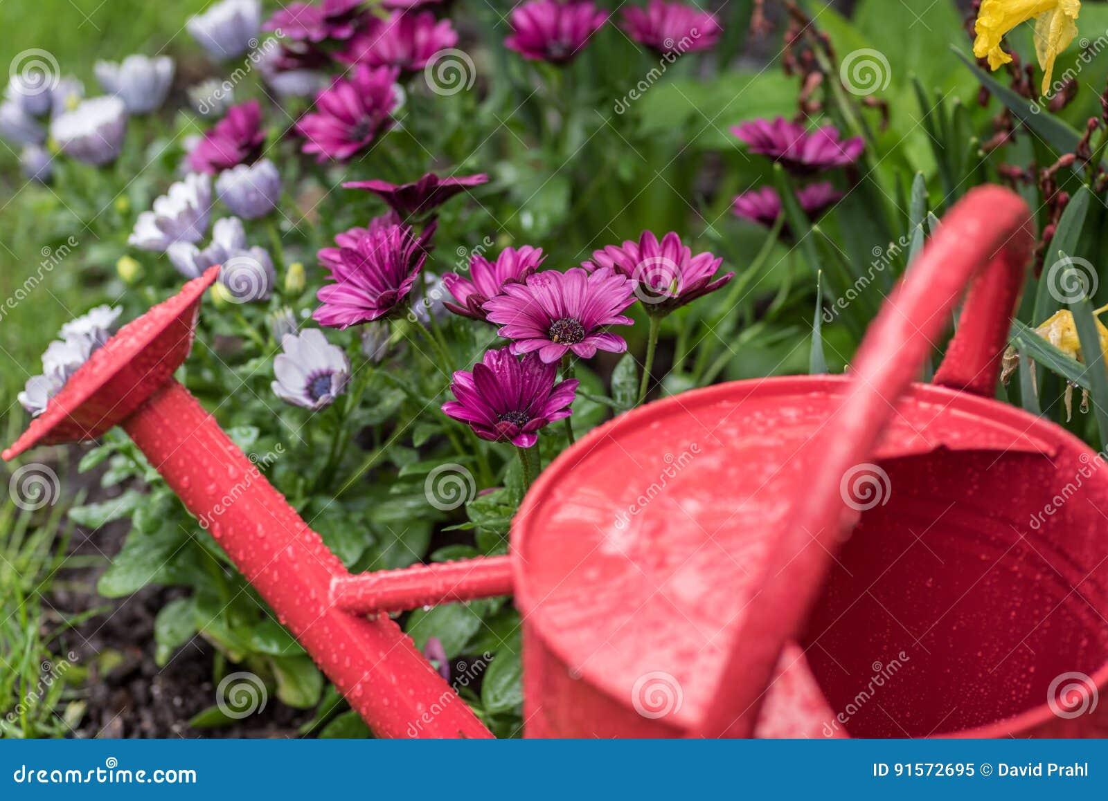 gouttes de pluie sur la boîte d'arrosage avec les fleurs colorées à