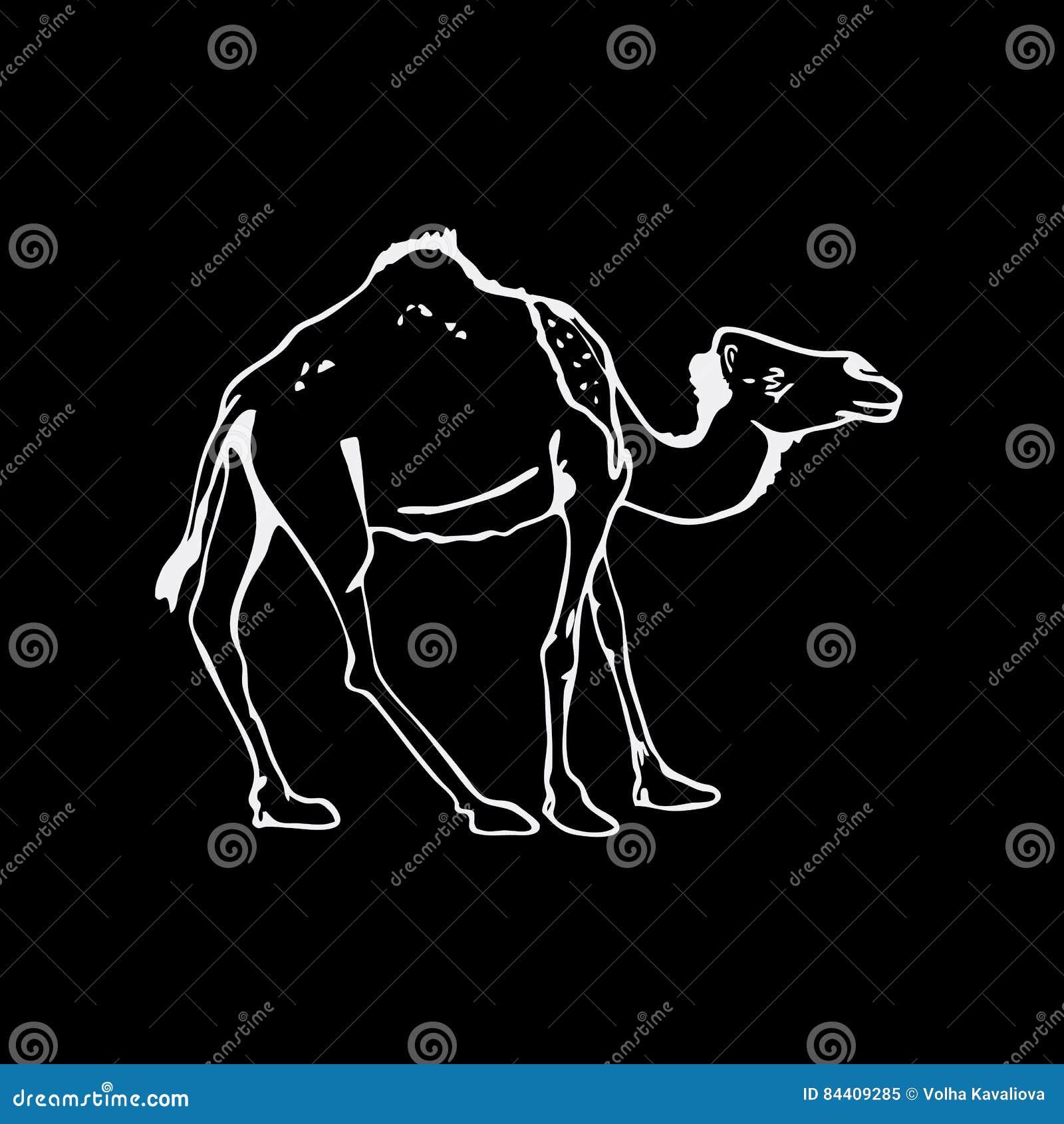 Gráficos A Mano Del Lápiz, Camello Grabado, Estilo De La Plantilla ...