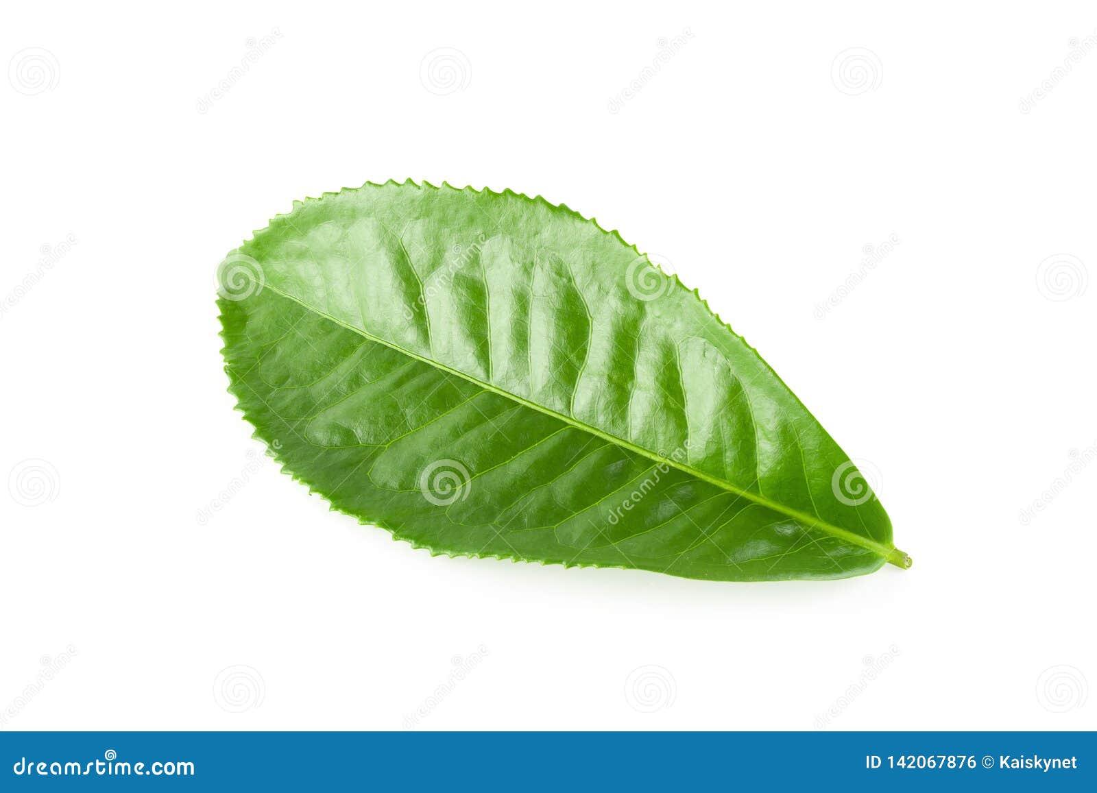 Grünes Teeblatt lokalisiert über weißem Hintergrund