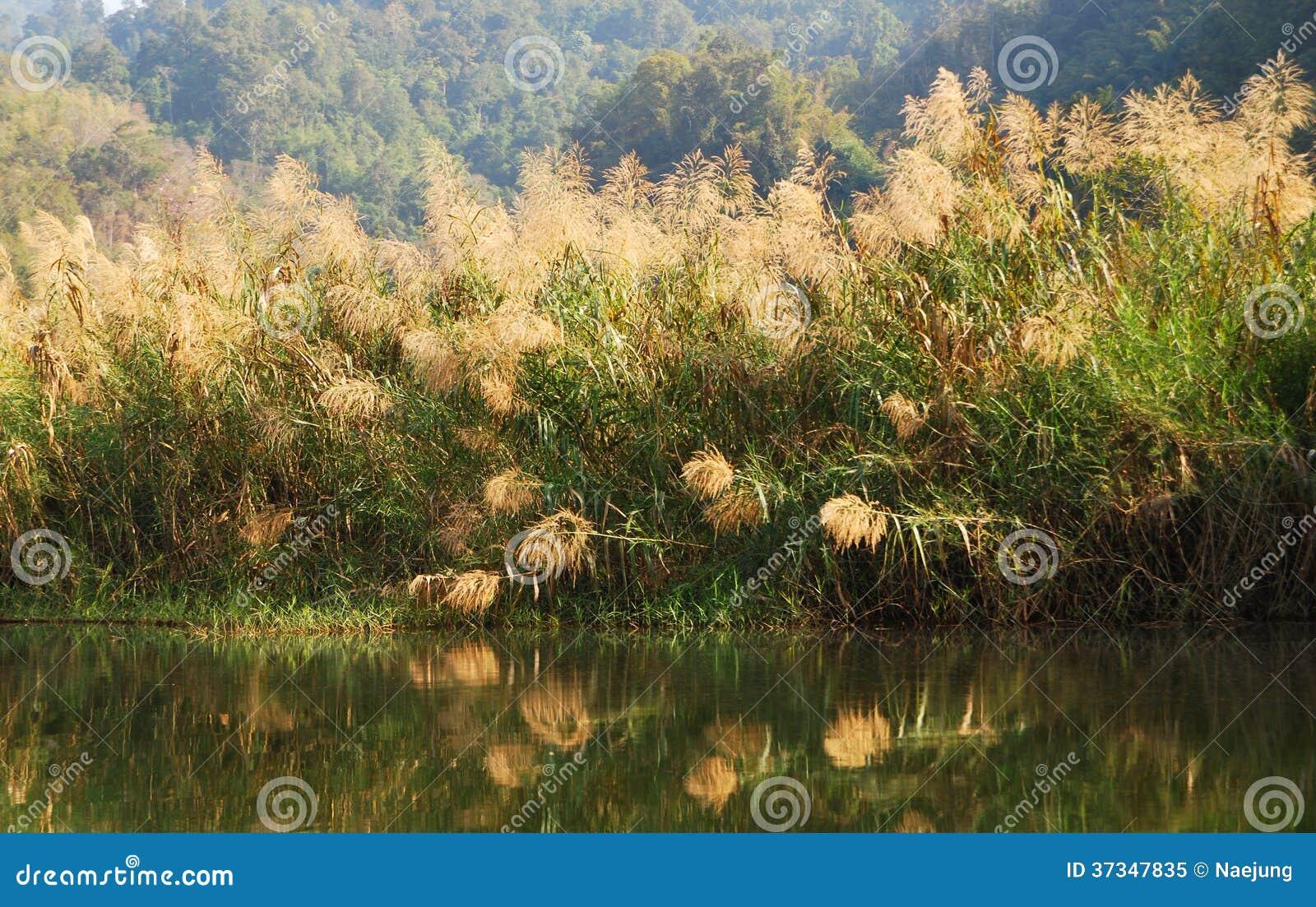 Gräs- marsklan