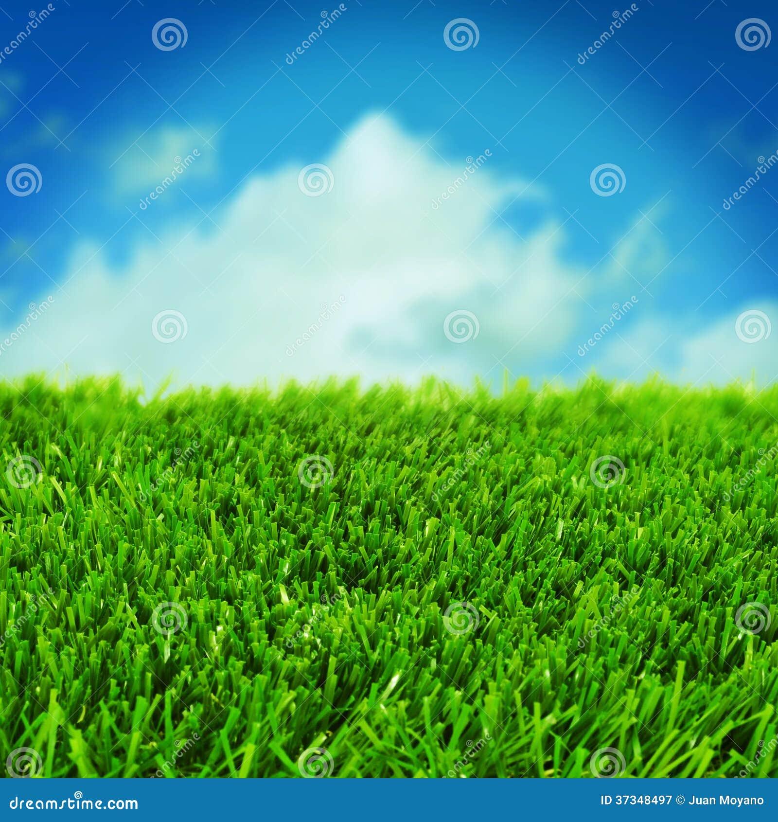 Gräs och himlen