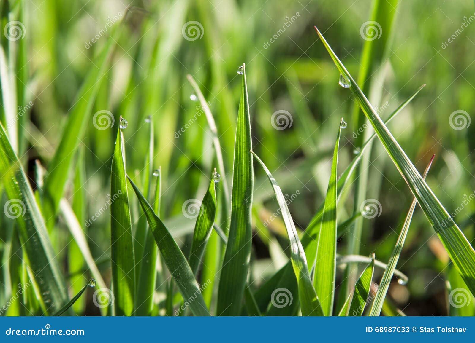 Gräs på den suddiga bakgrunden